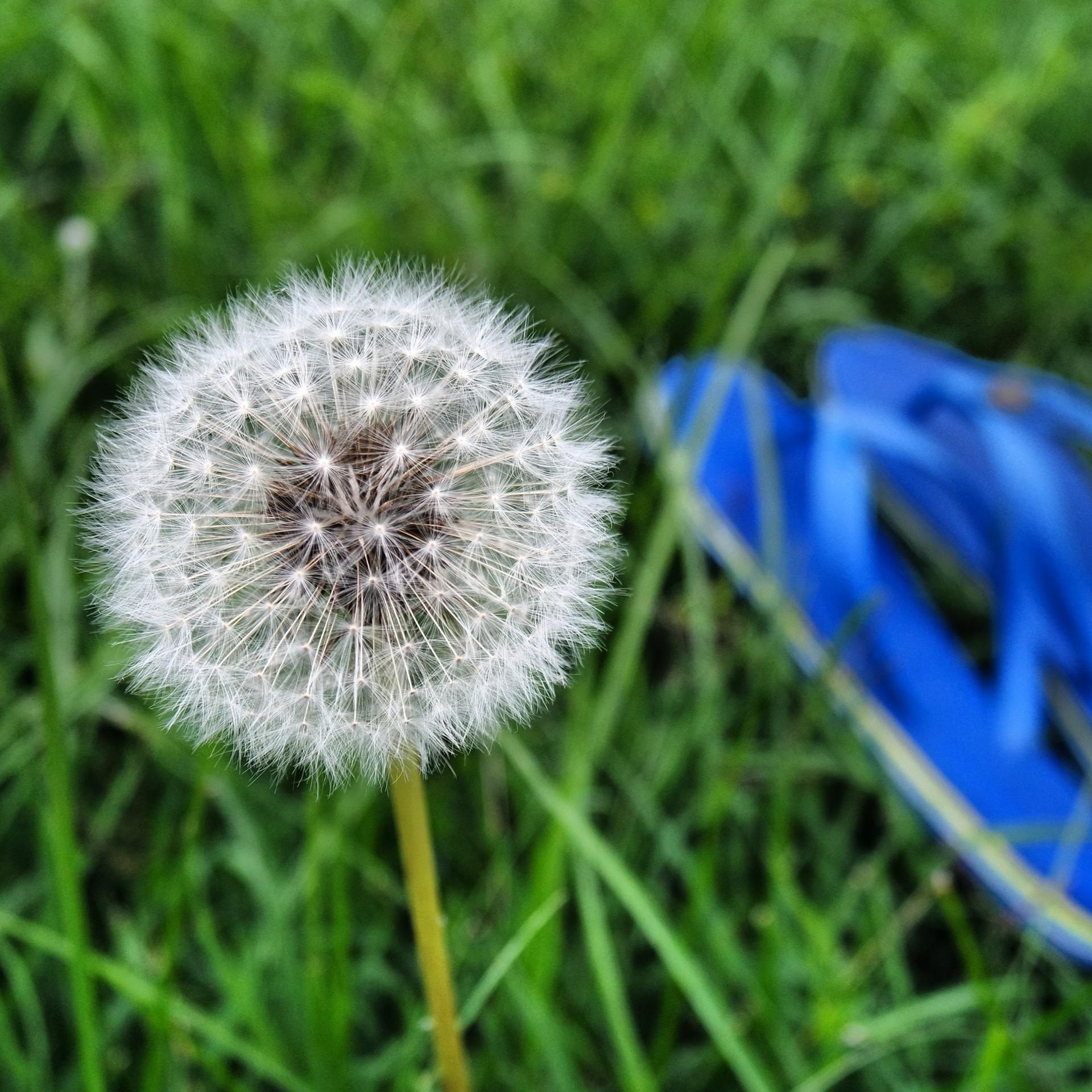 Fleur et tongs - summer
