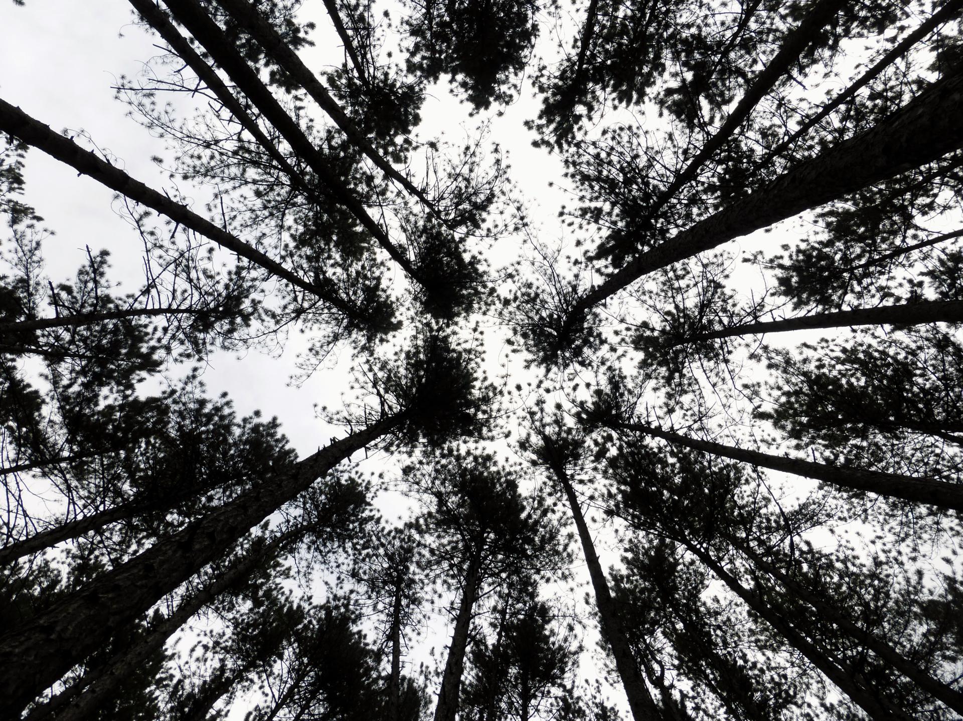 Gravure Nature