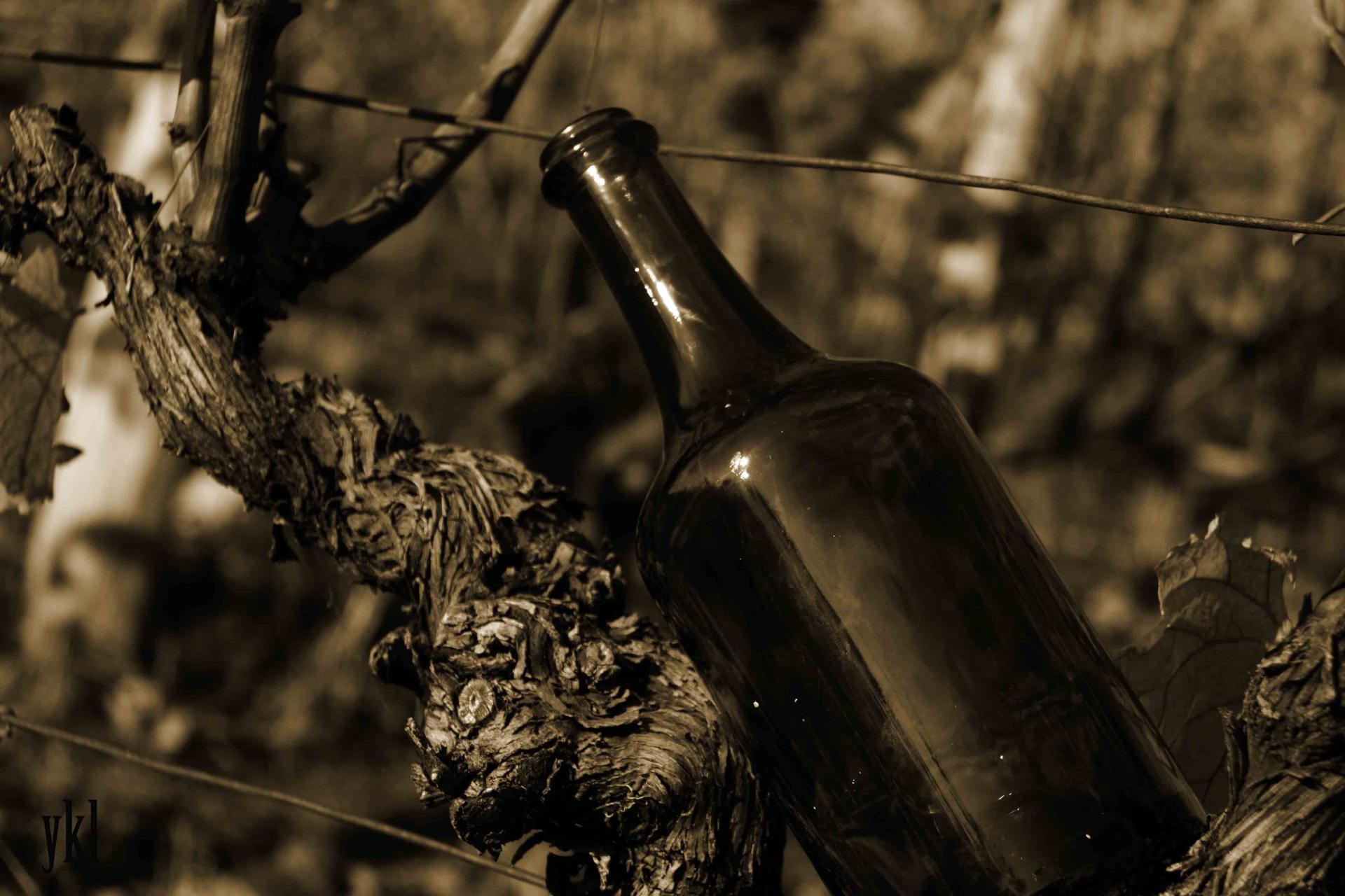 vignes vintages