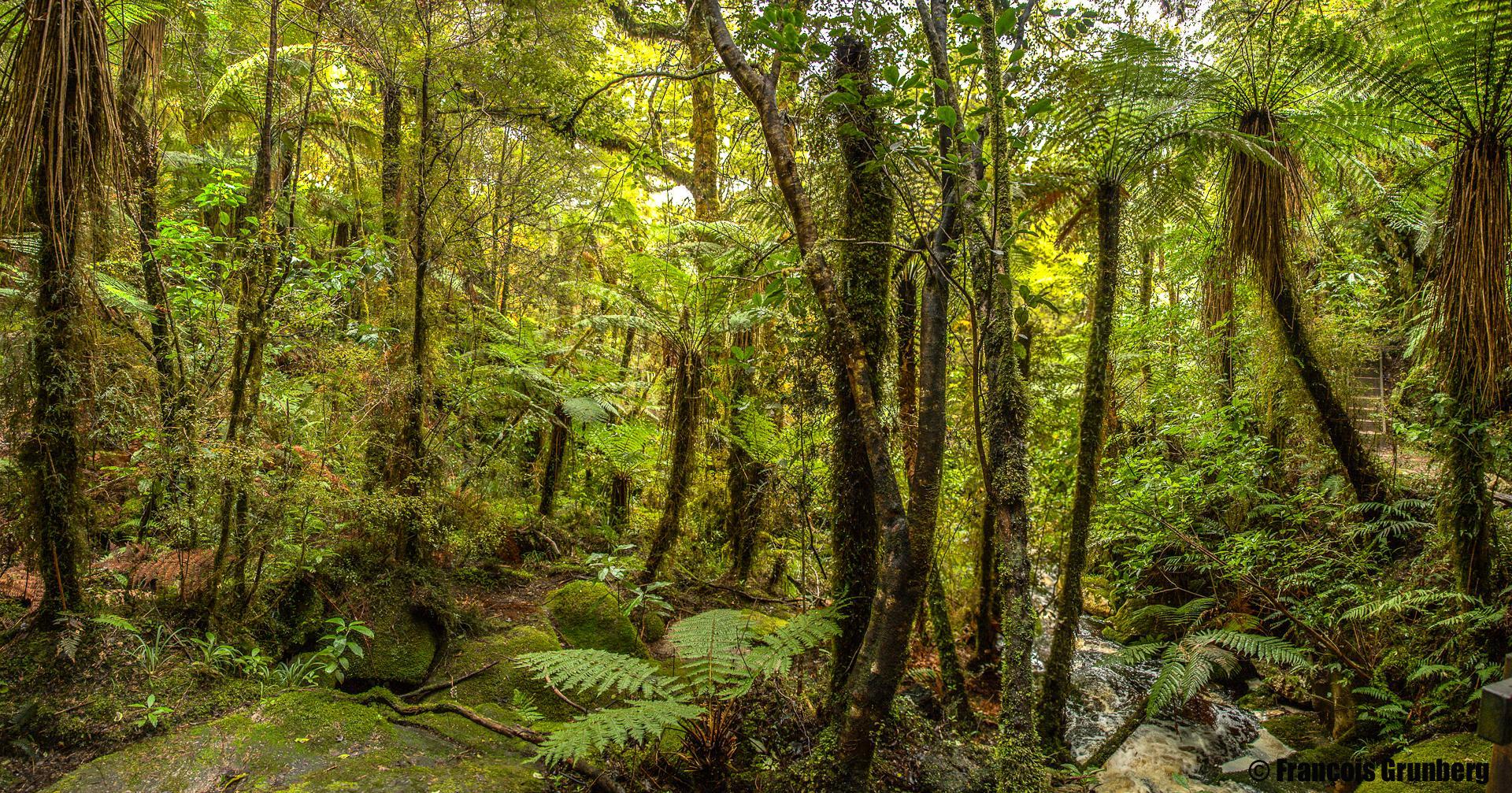 karamea forest 1_imp