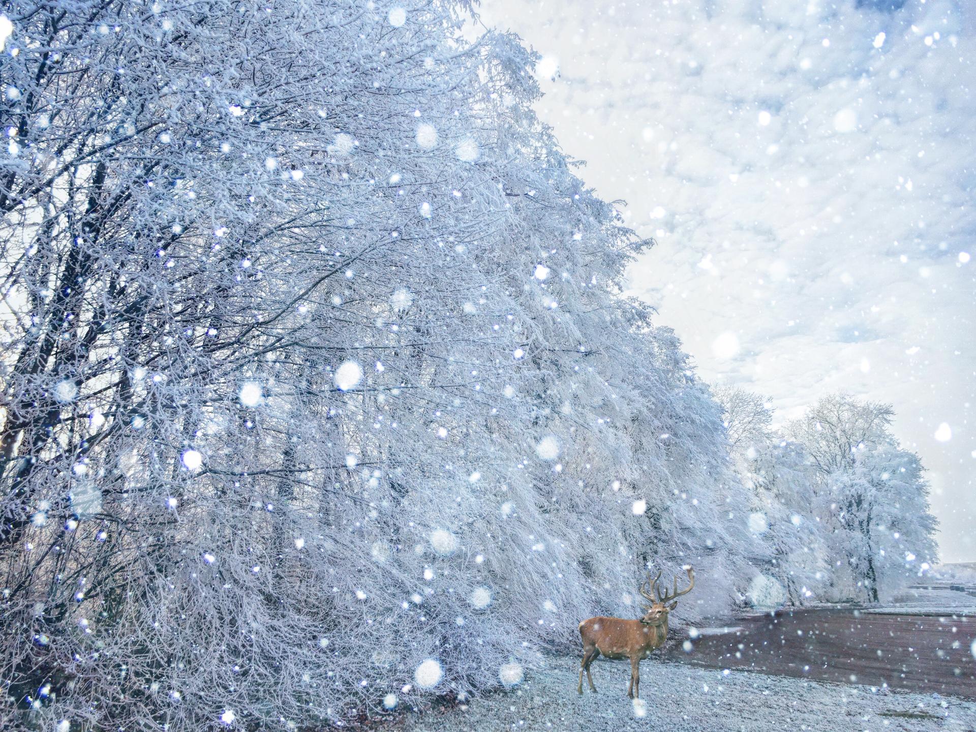 Magie d'hiver (quelque part en Lorraine)