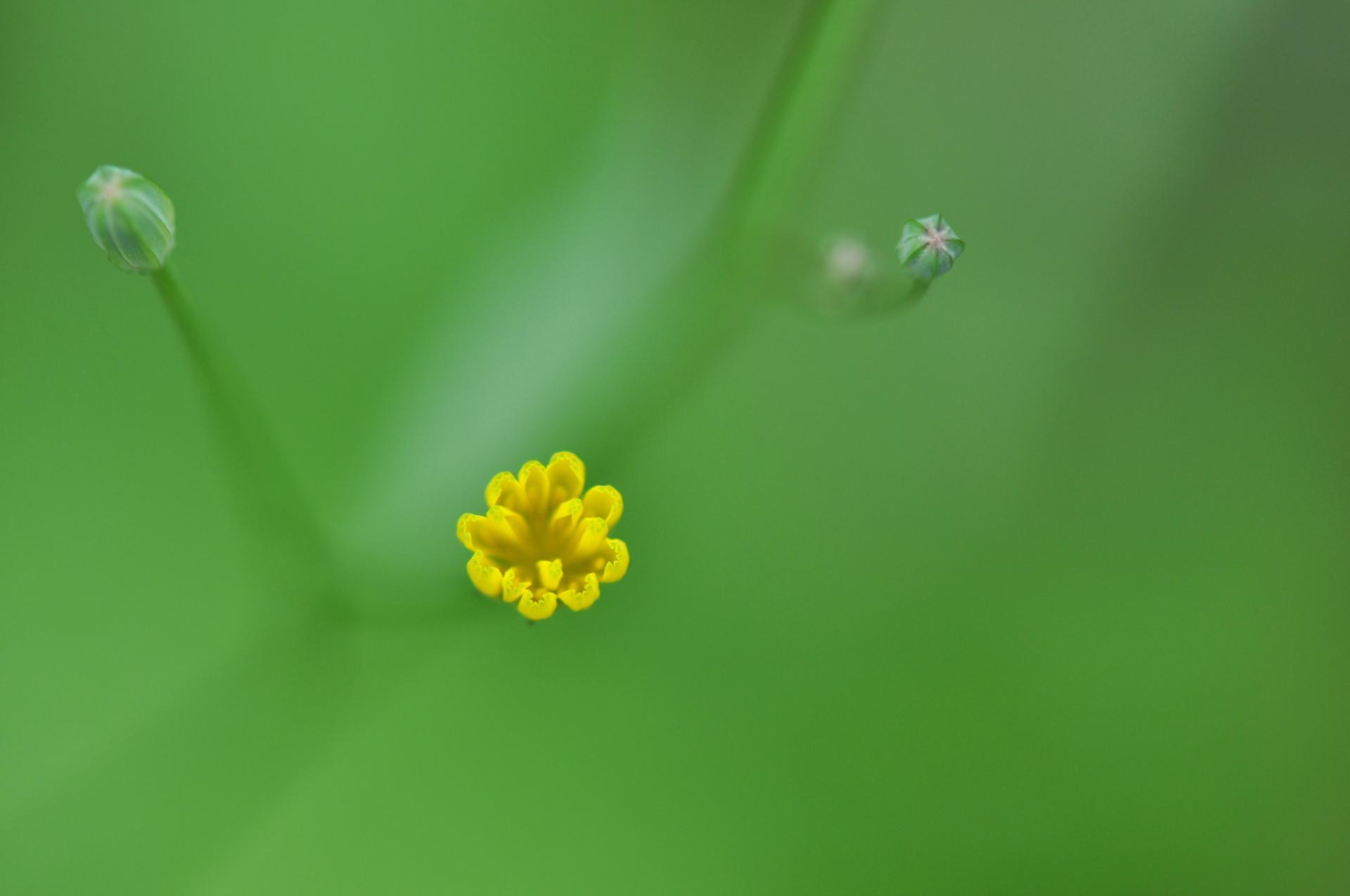 Une touche de jaune...