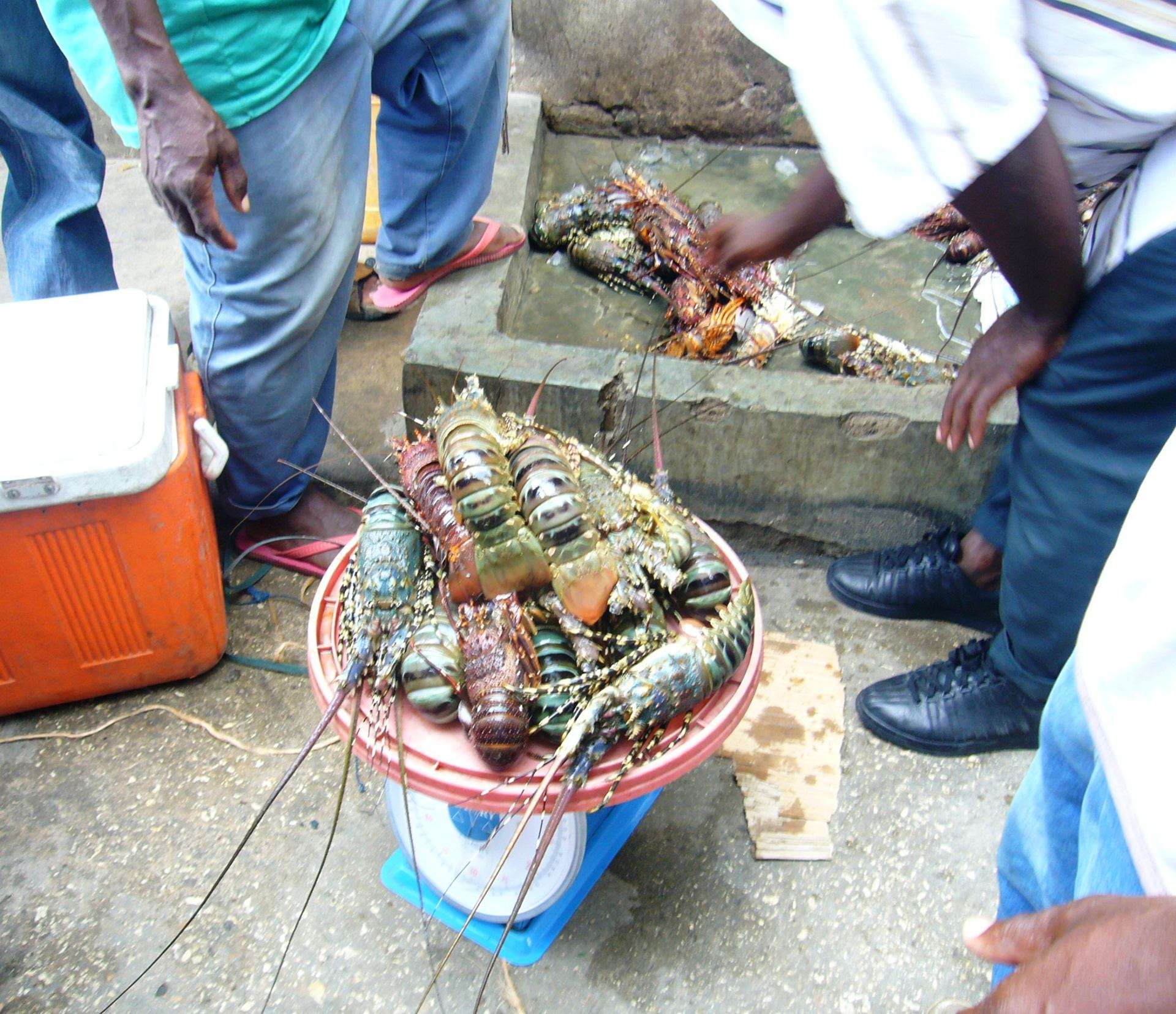 Cigale de mer, marché de Zanzibar, Tanzanie