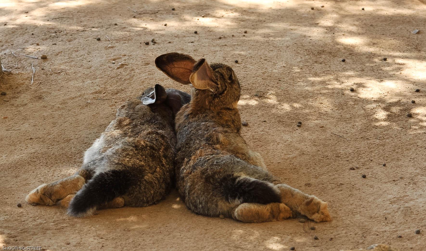 un amour de lapinou  quand on aime on le montre qui mieux que la nature pour nous le démontrer