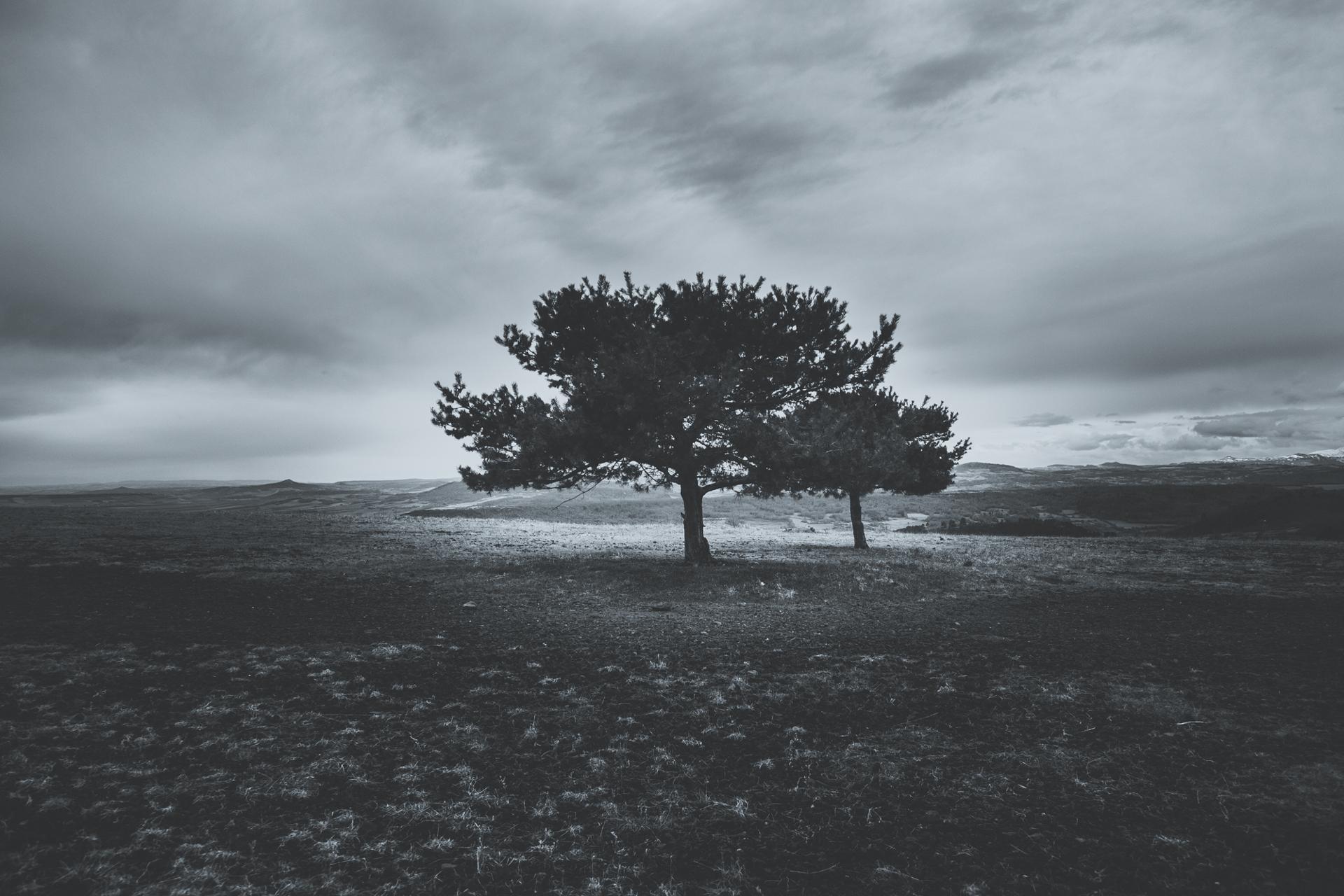 Tree in a big field