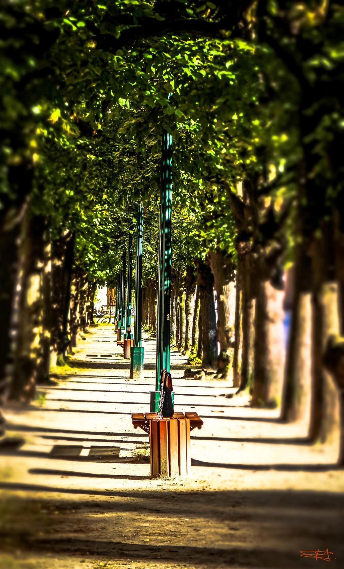Promenade Ensoleillée