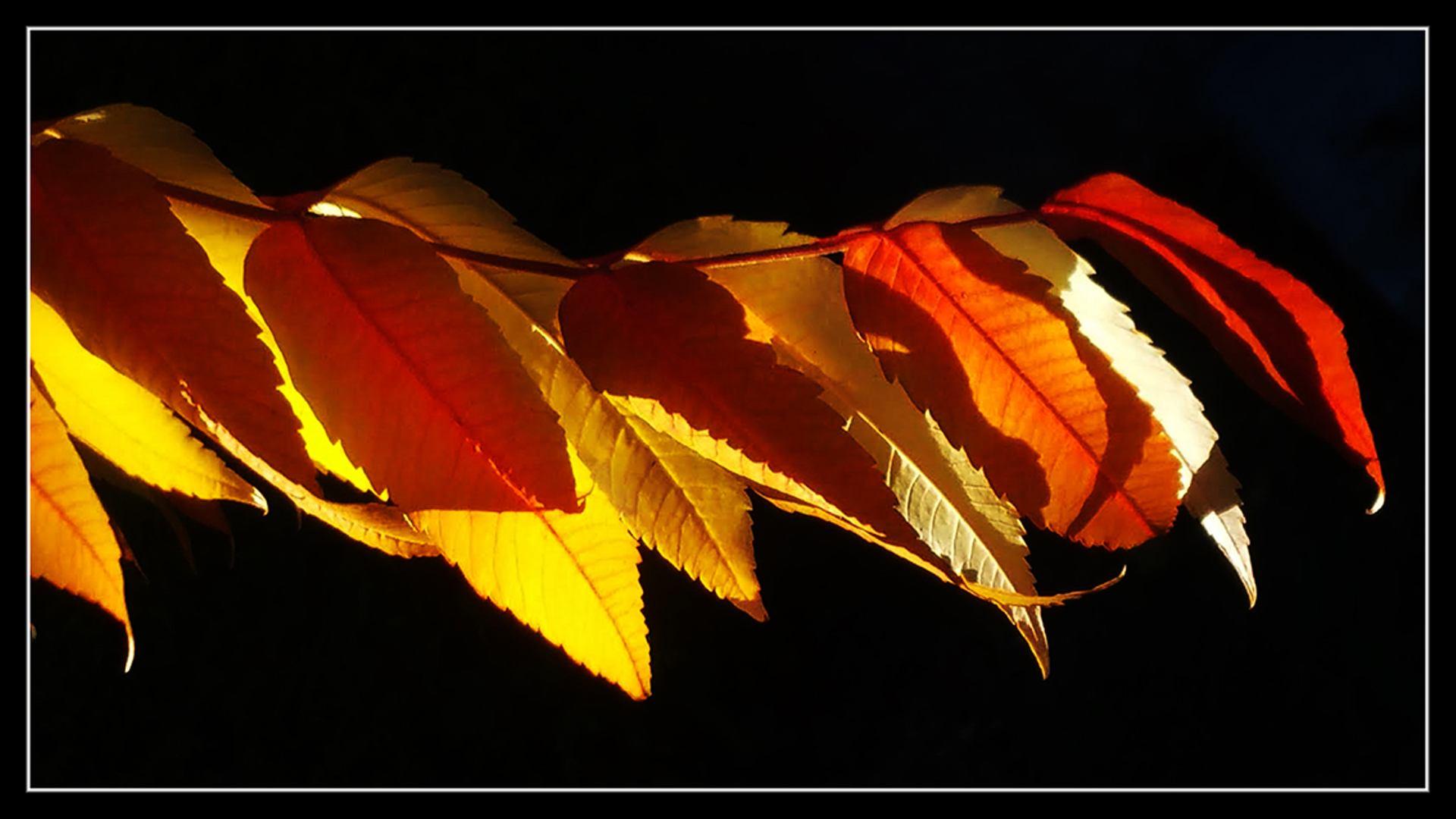 Si j'étais... l'automne