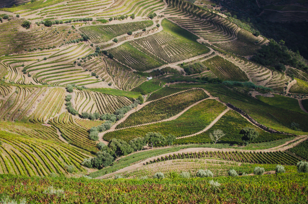 Les vignes à perte de vue dans la vallée du Douro
