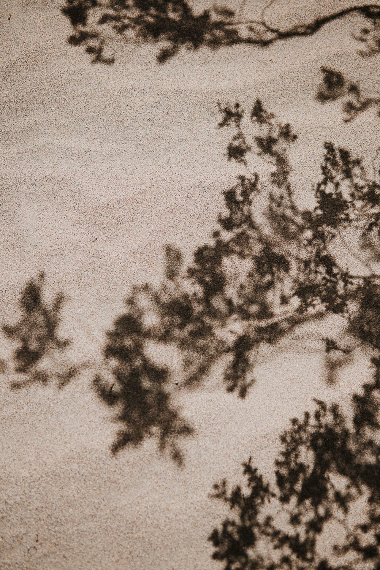 Ombres végétales à Death Valley