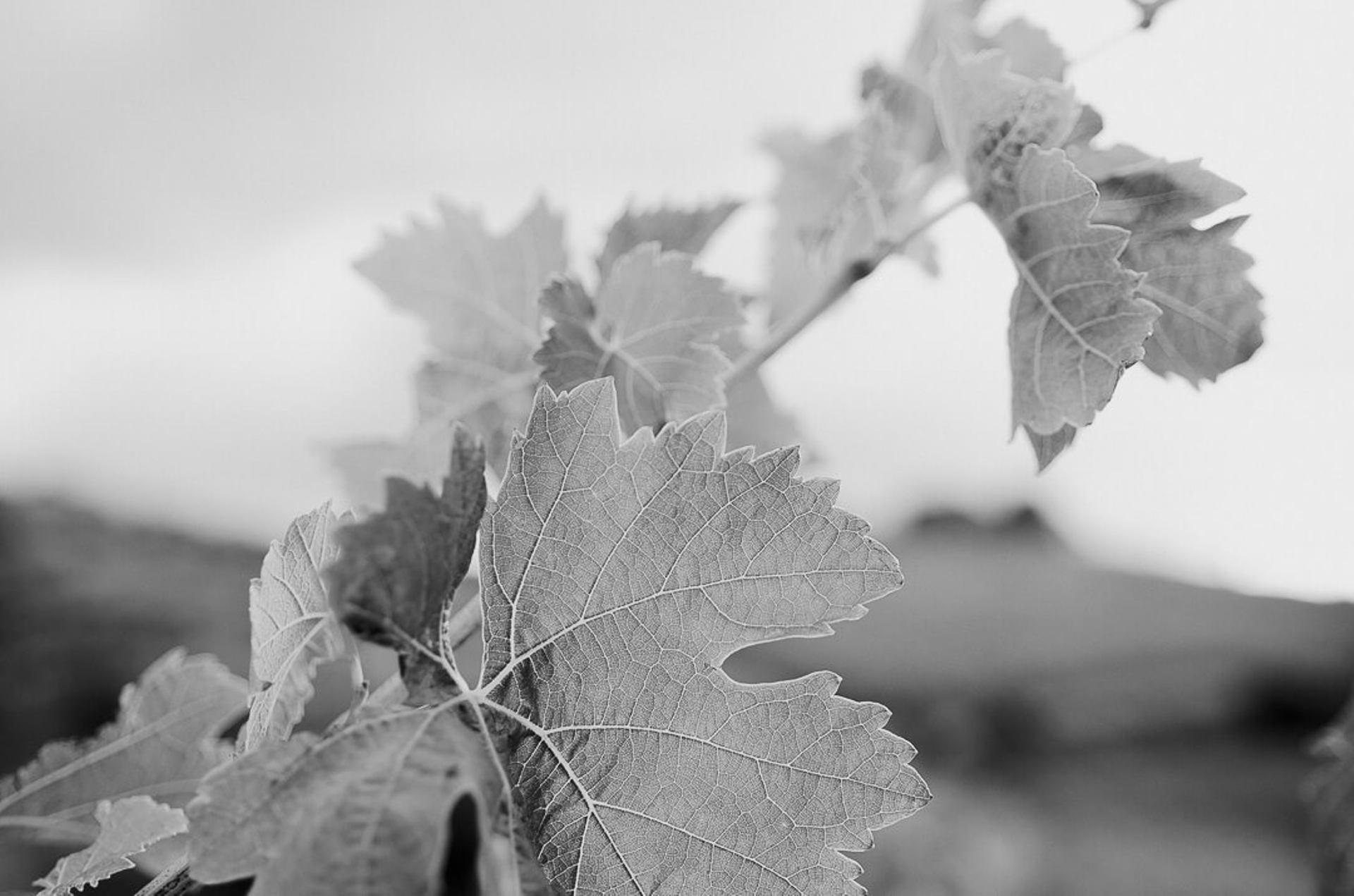 Les Quatre Saisons au Vignoble