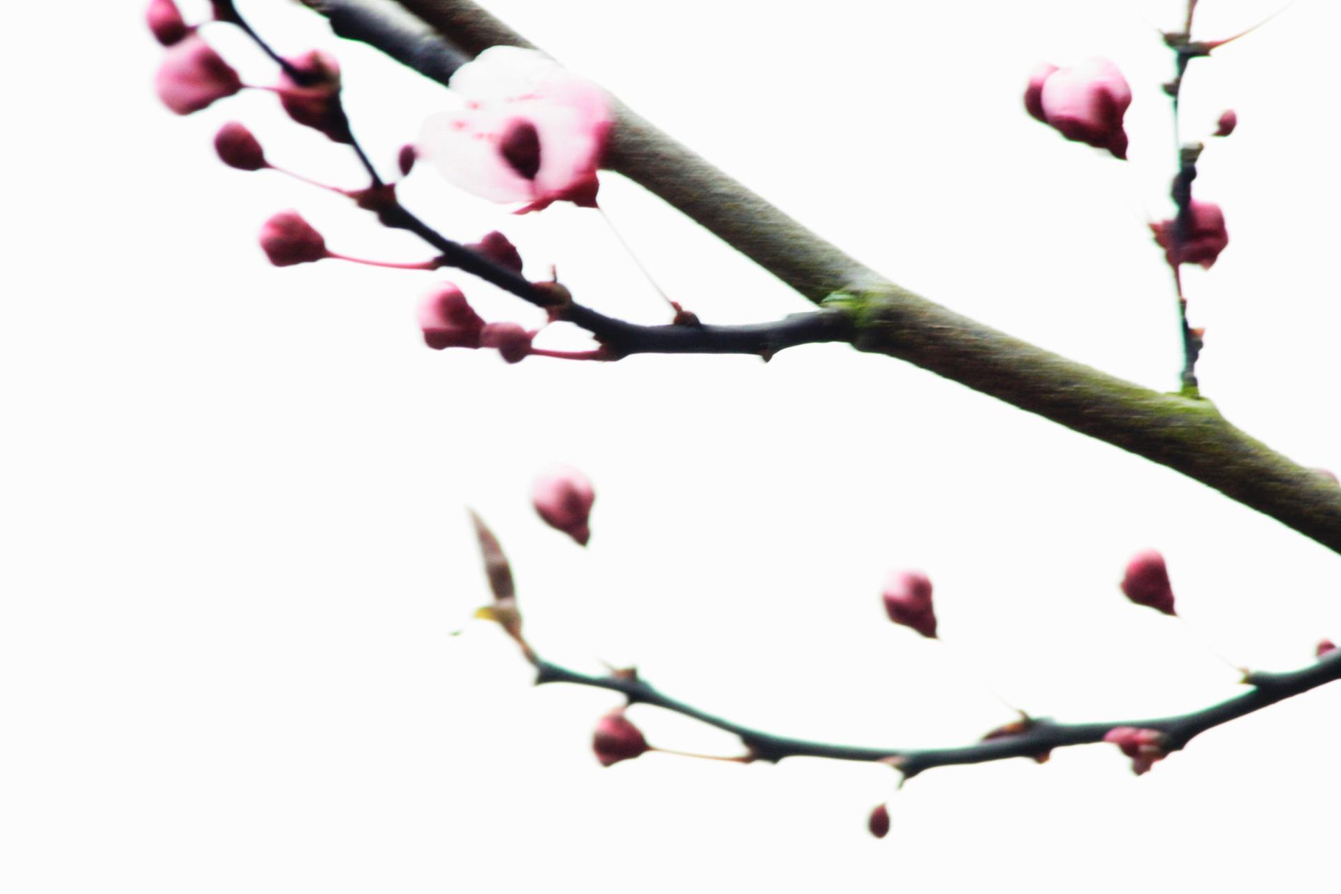 un air de printemps 3