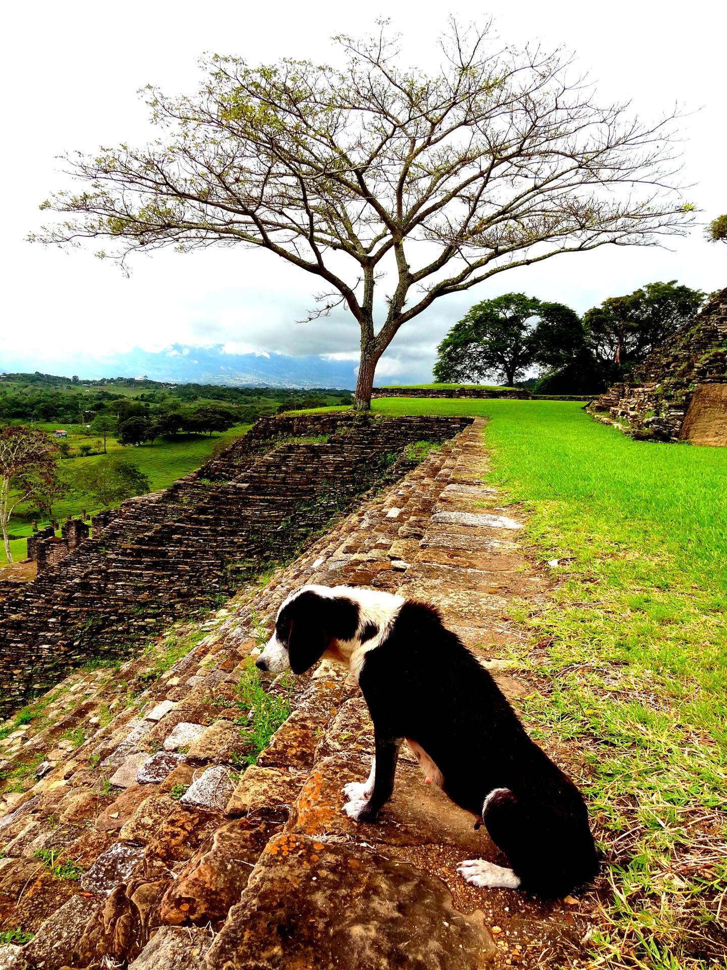 The Palenque dog