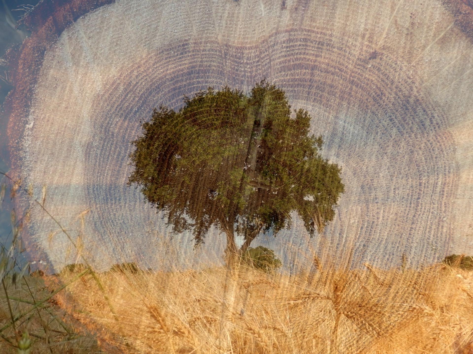 au coeur de l'arbre