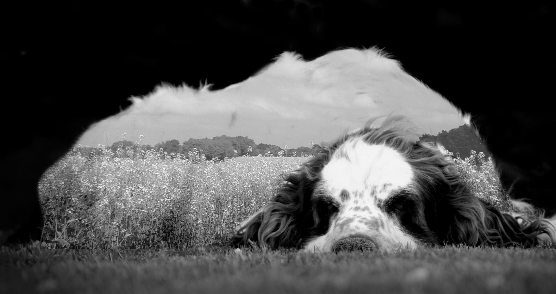 il a du chien ce paysage !
