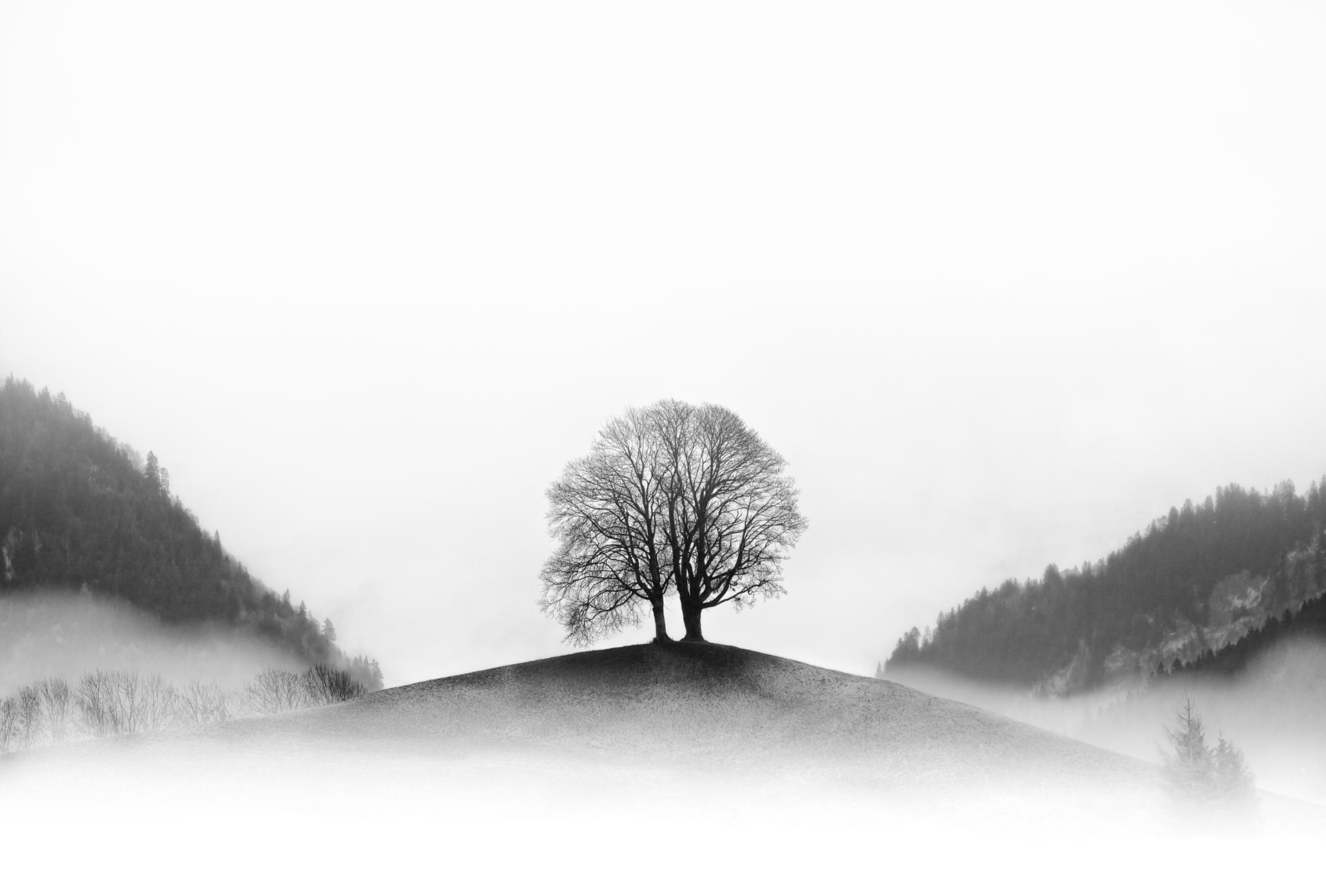 Un arbre à Gruyères