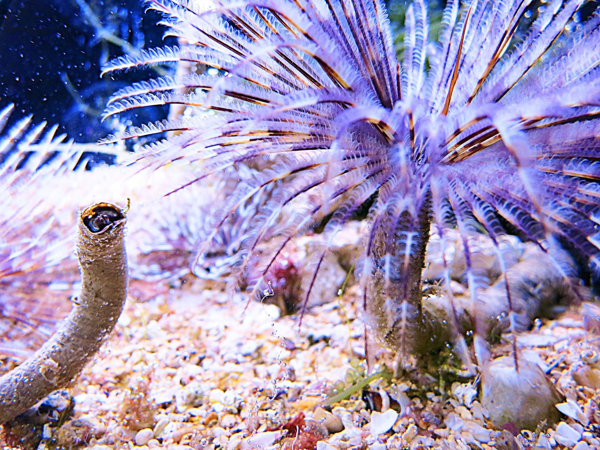 Palmier violet sous-marin !