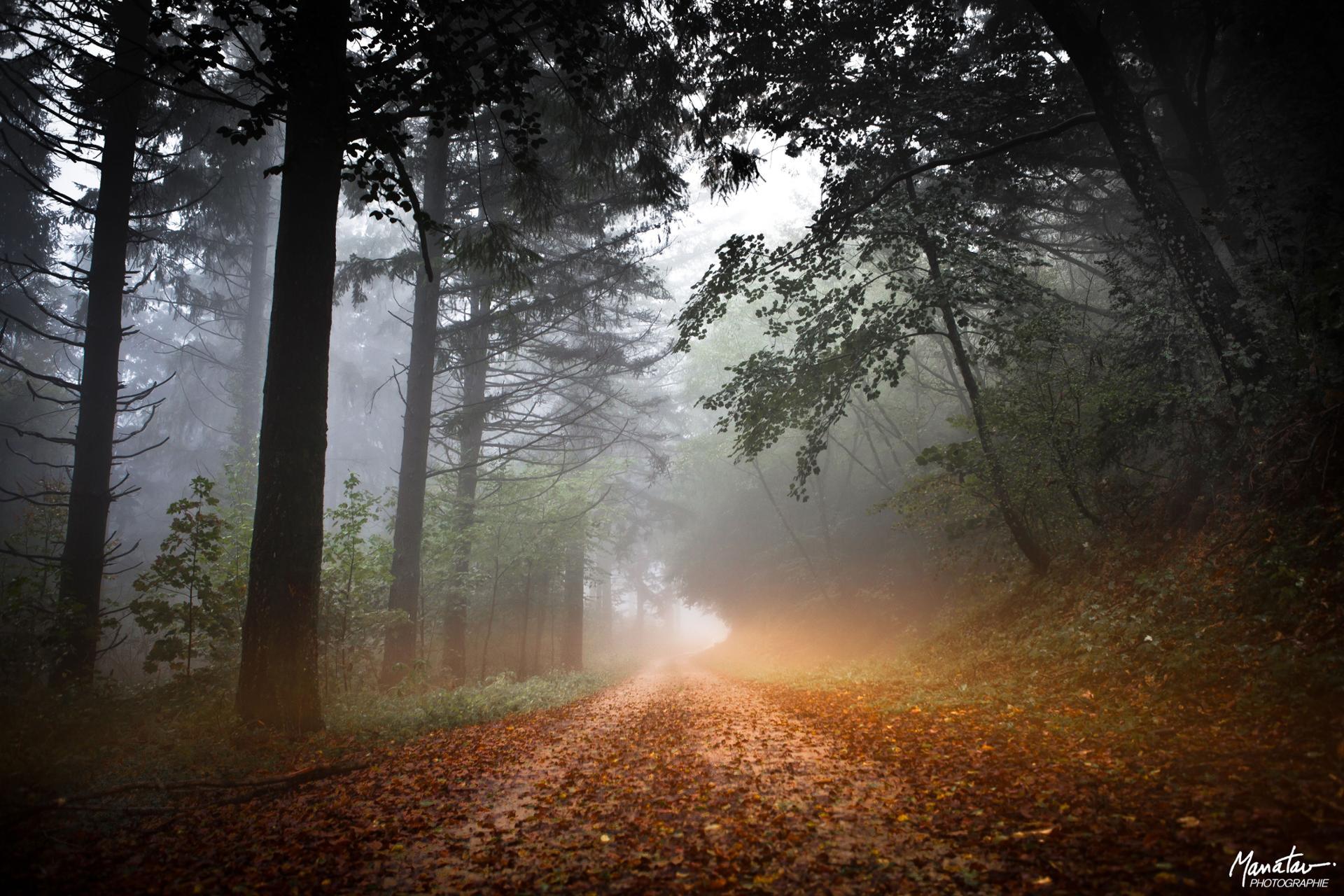 Foggy way