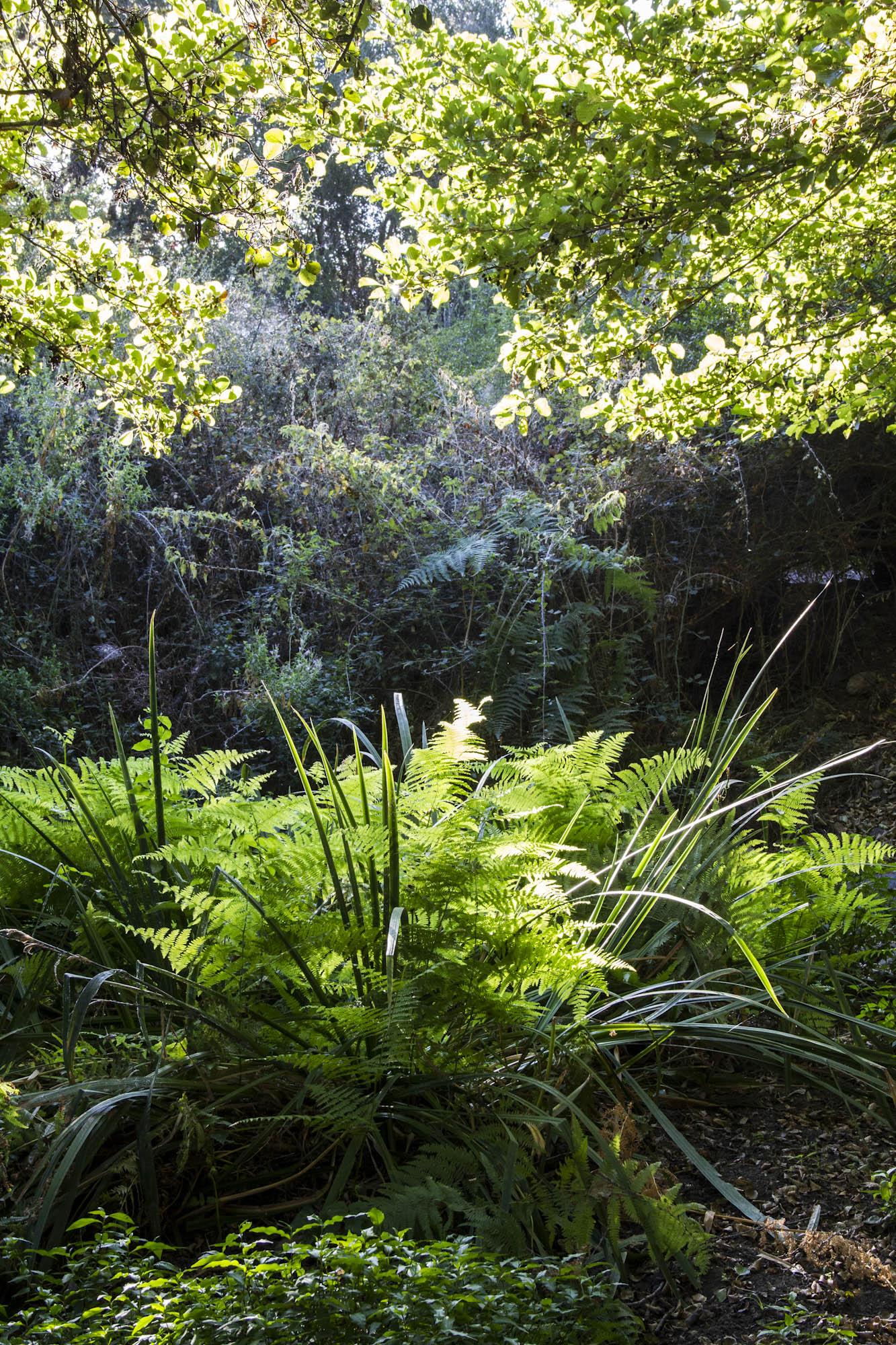 lumière de verdure, un jardin sauvage!