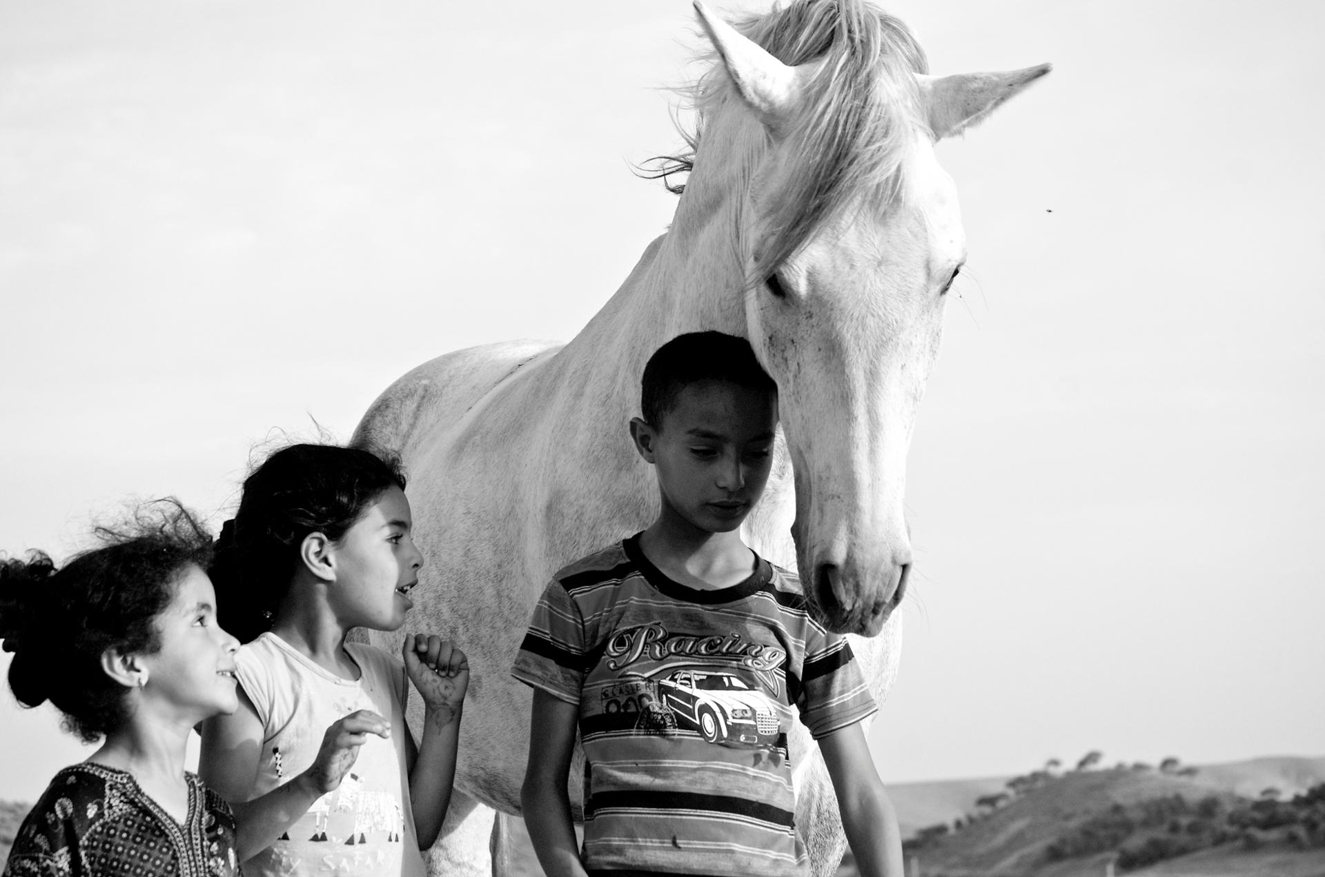 we all love horses