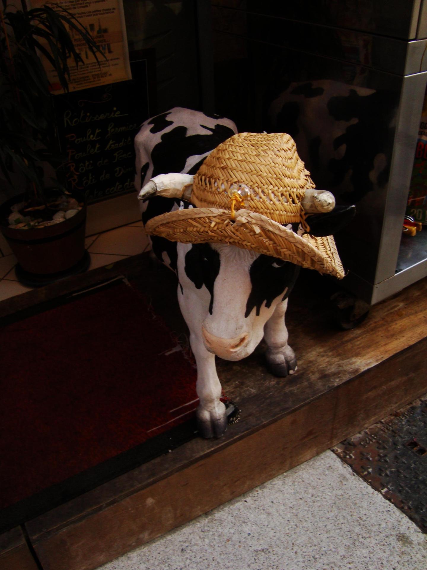 Corsica cow