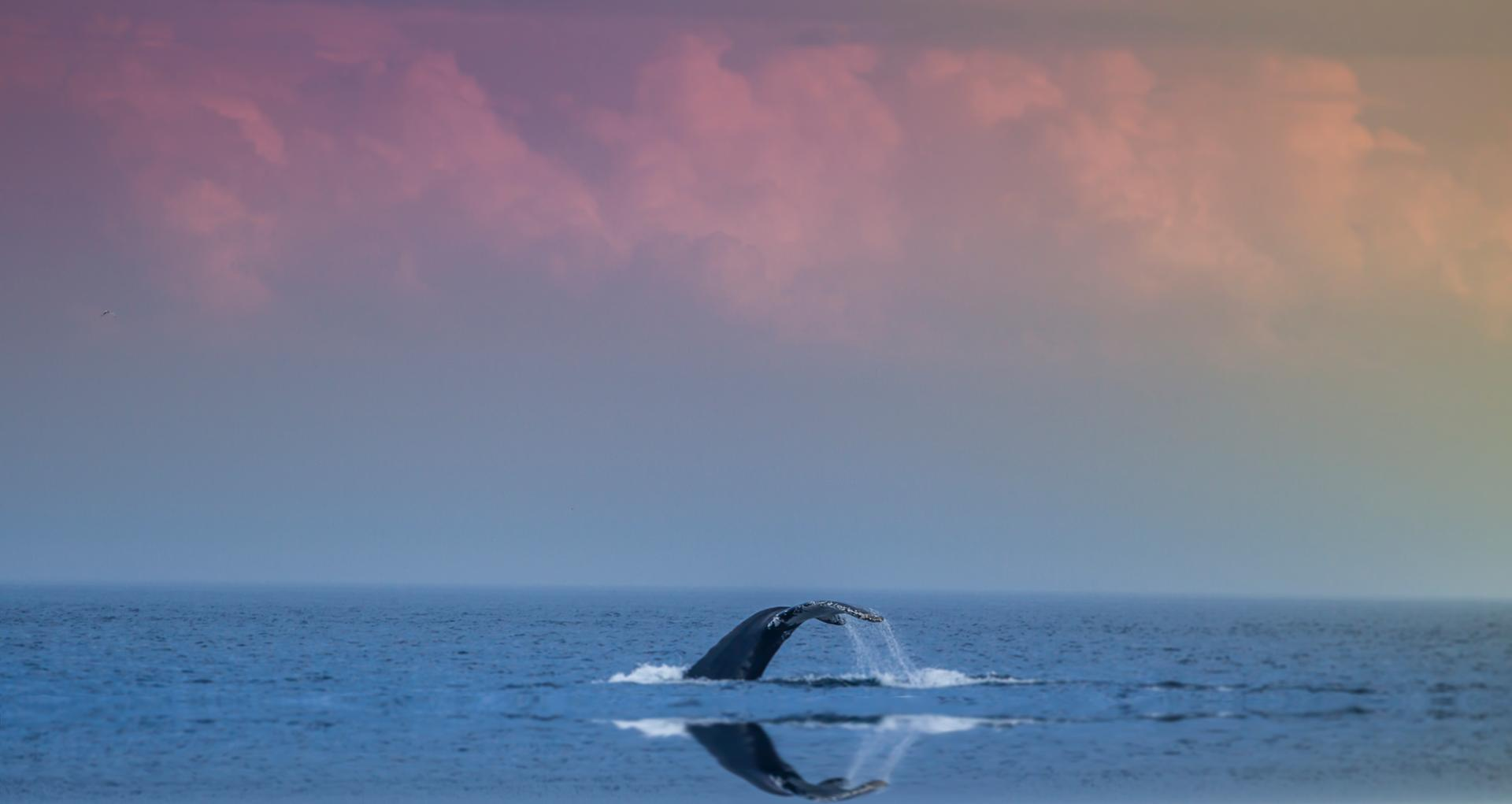 Whale's Tail and a Beautiful Sky