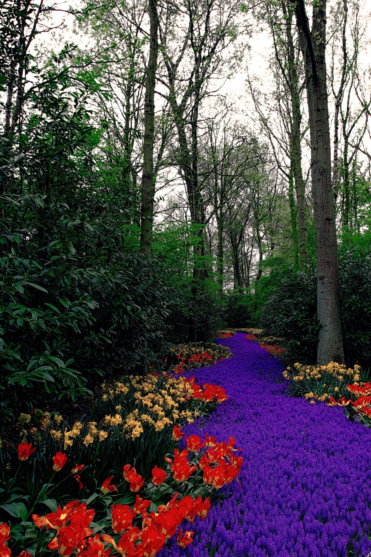 Une rivière de fleurs