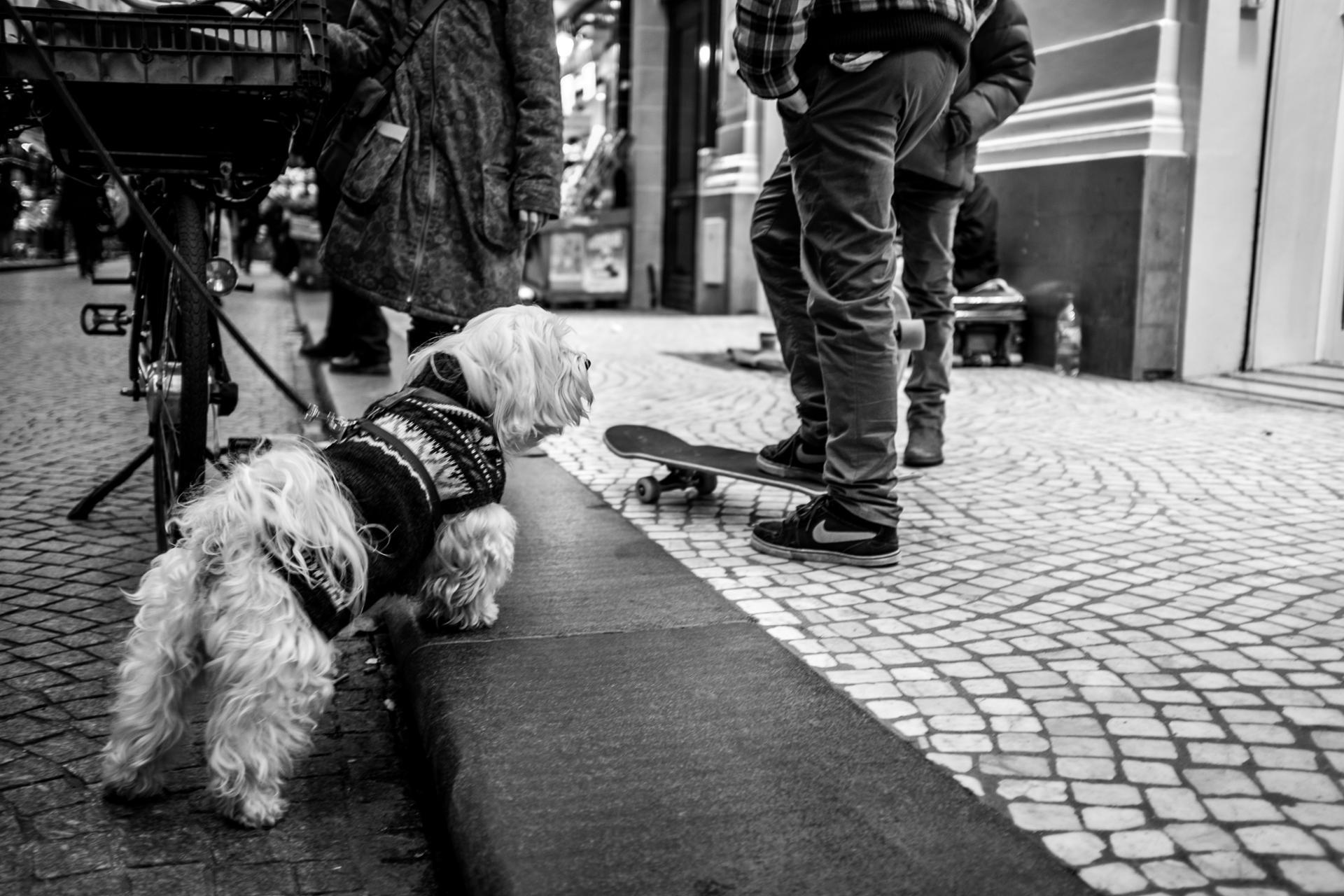 Skate & dog