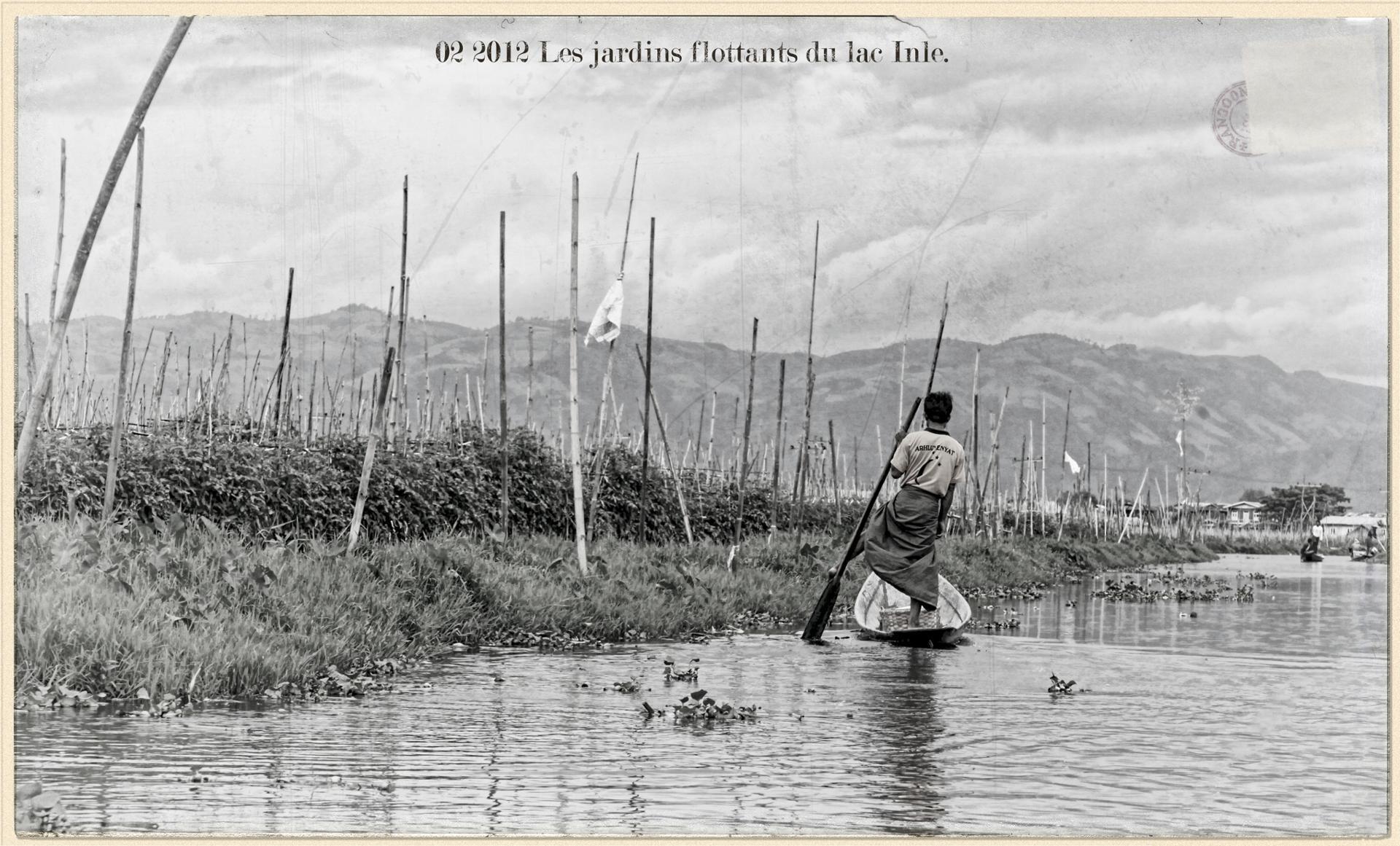Les jardin flottants du lac Inle