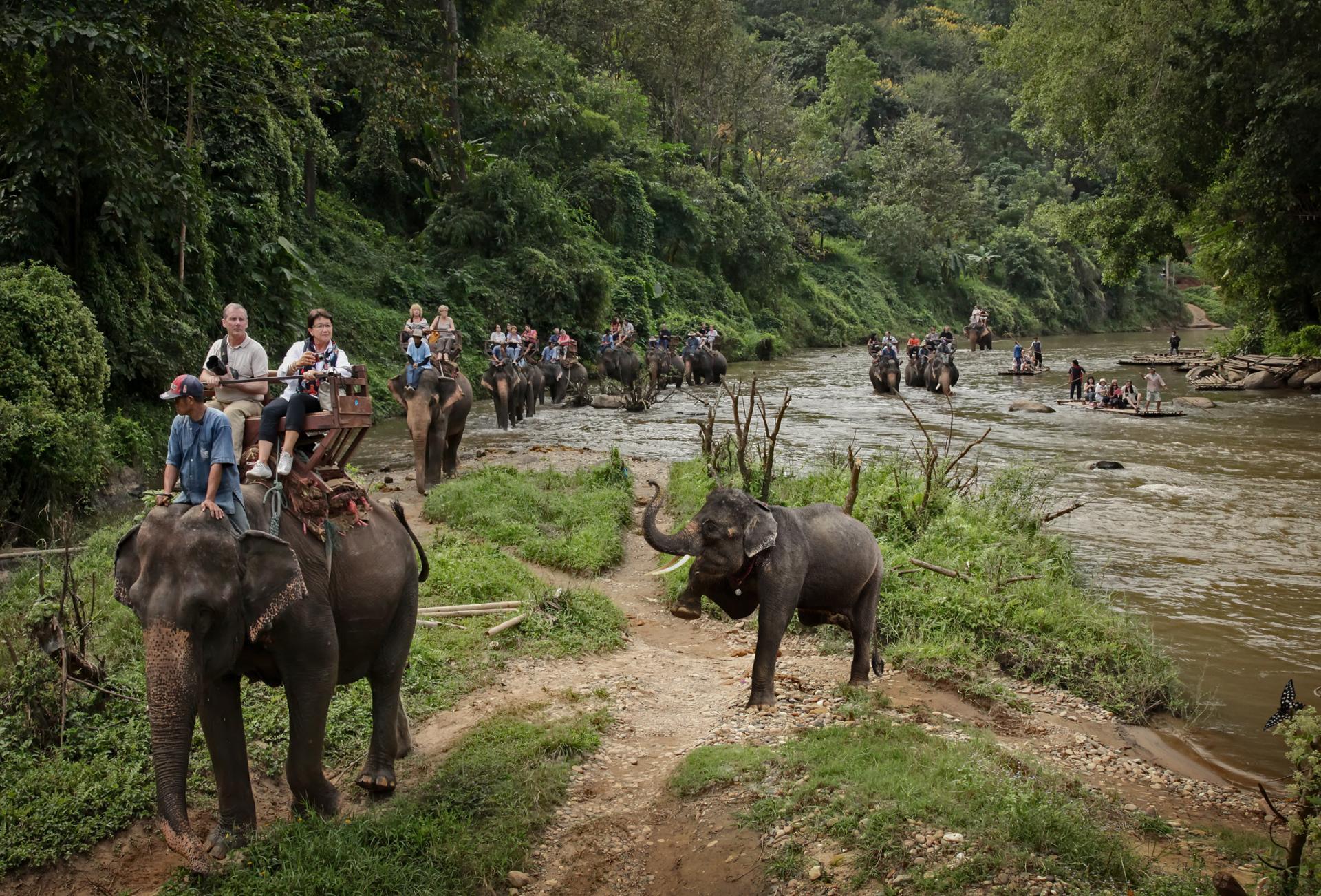 a dos d' éléphants.