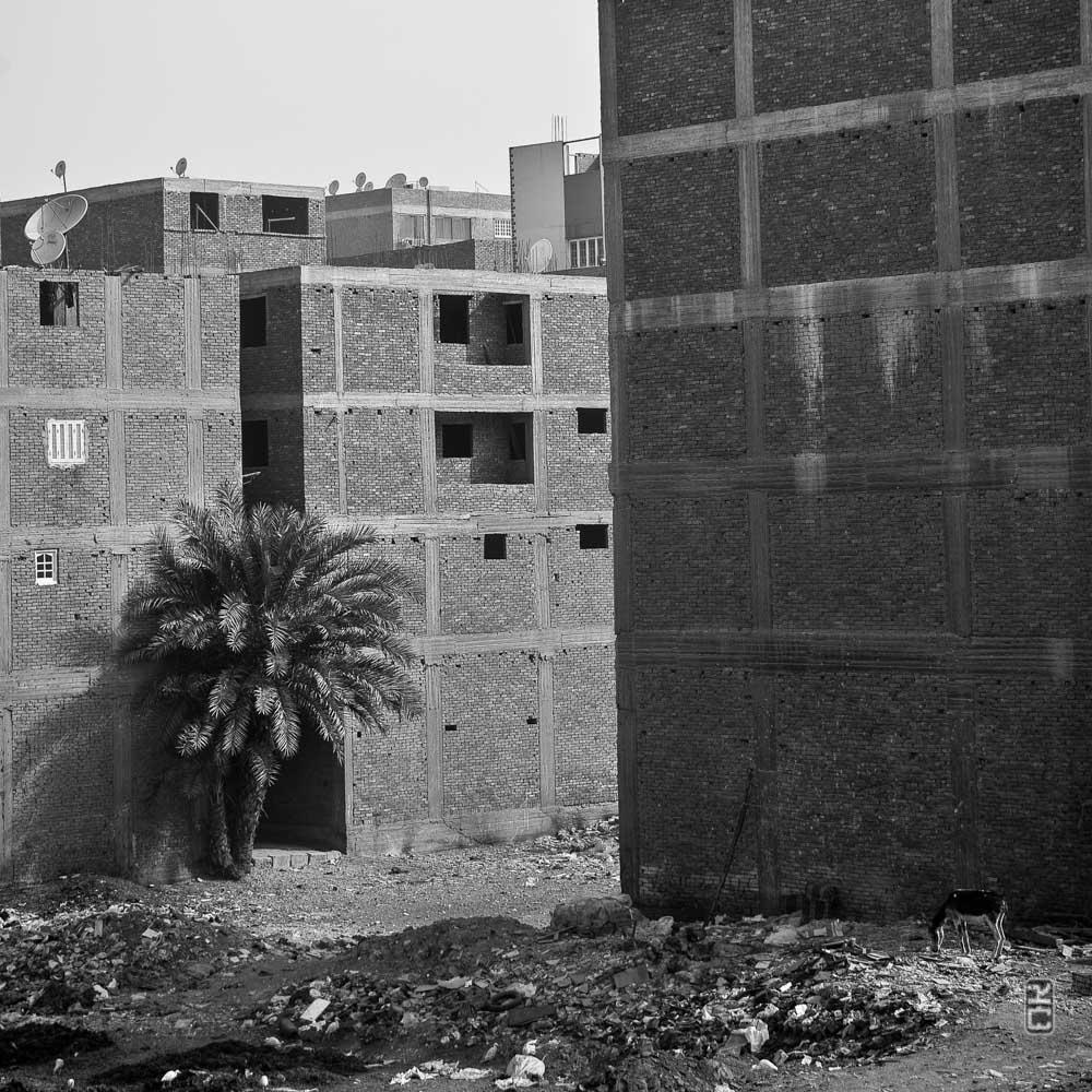 Un palmier parmi les briques...