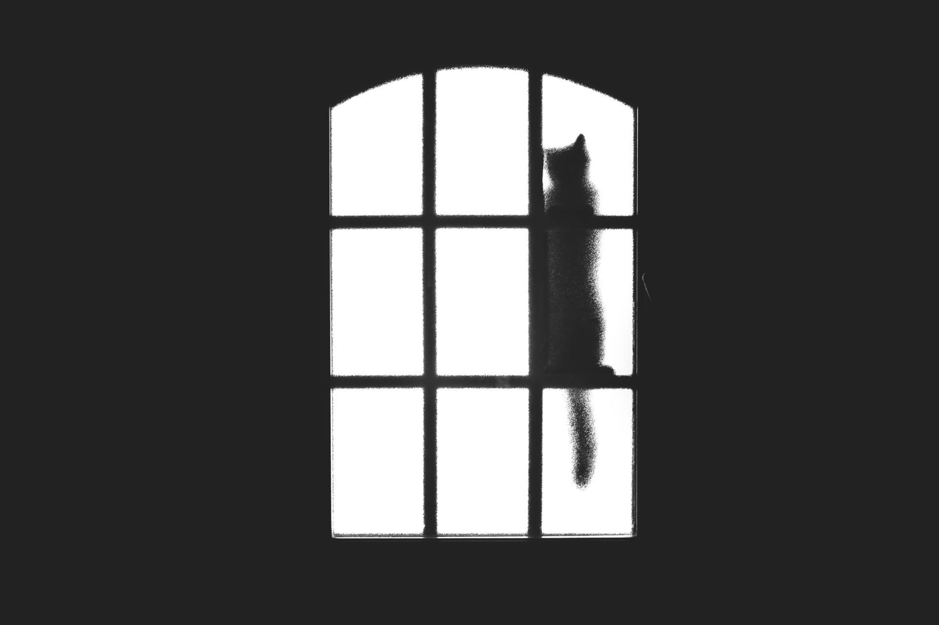 J'ai vu un chat