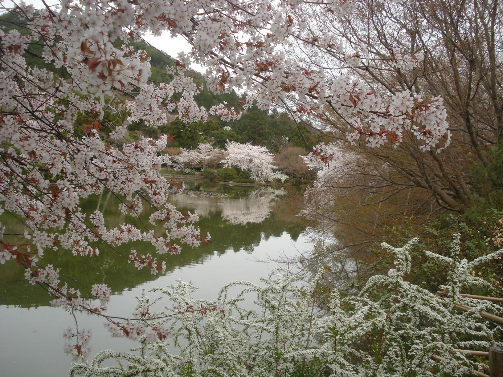 Jardin du temple de Ryoanji, à Kyoto