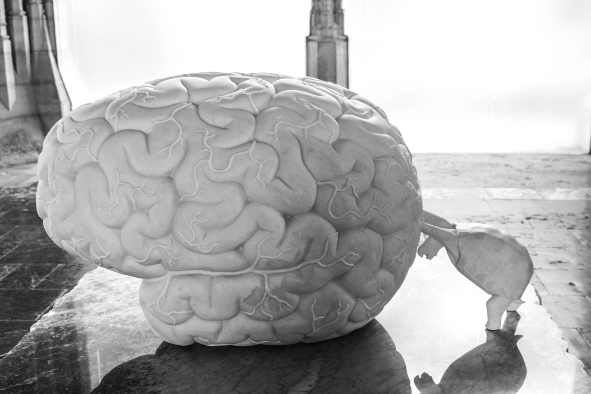 cerveau  poussé par une tortue ?