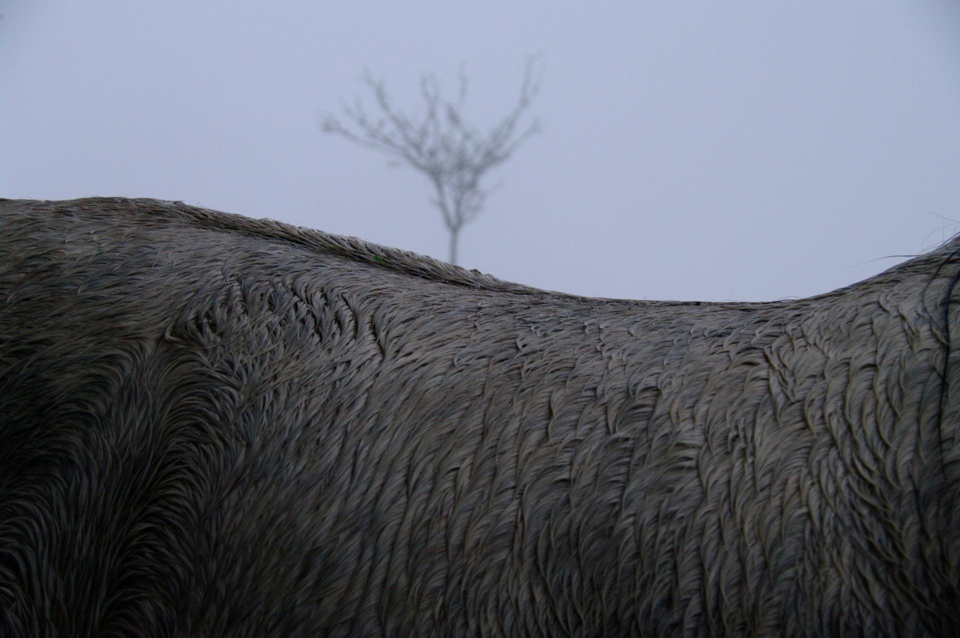 L'arbre et le cheval