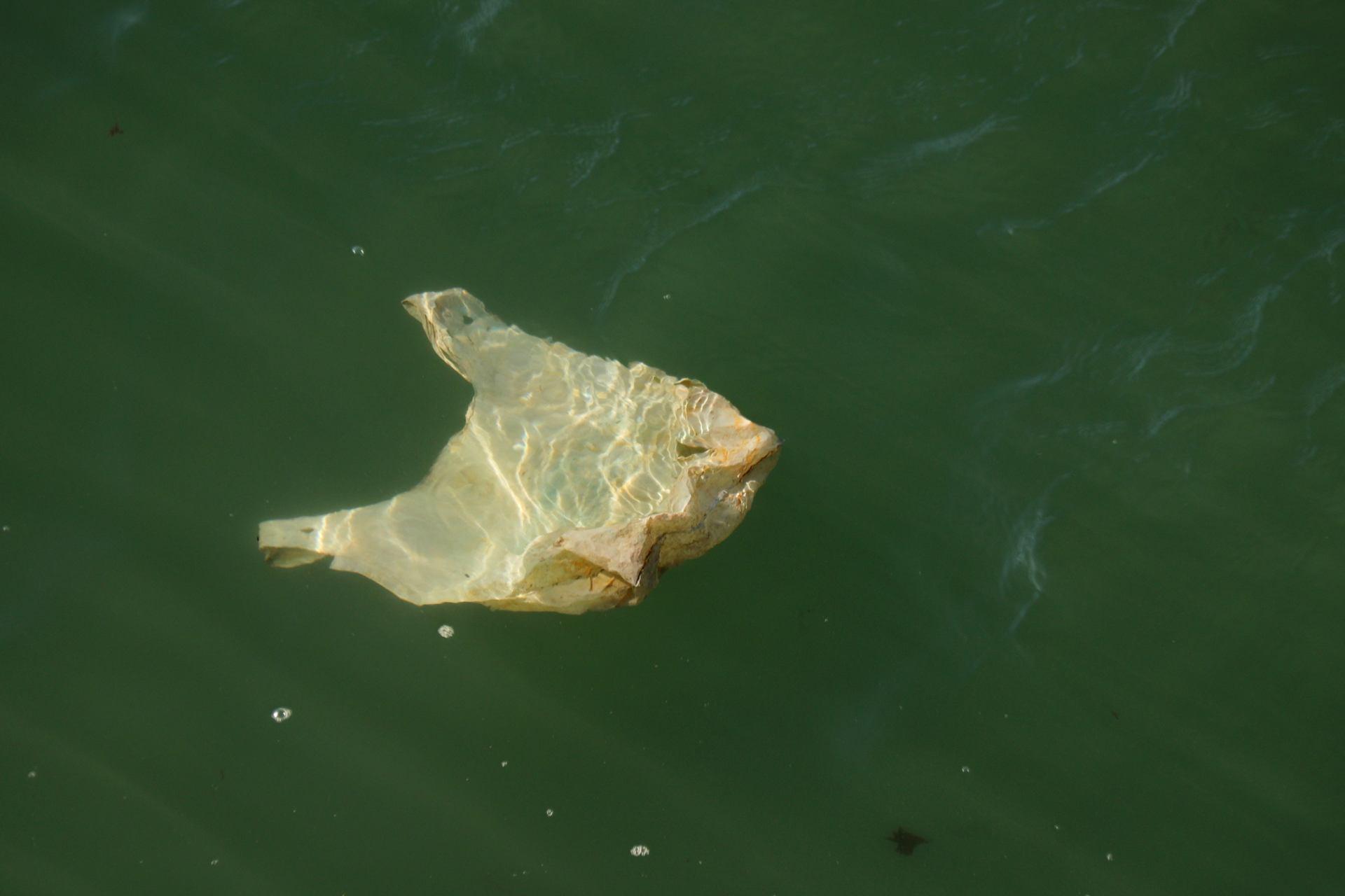 Un sac plastique se prenait pour un poisson