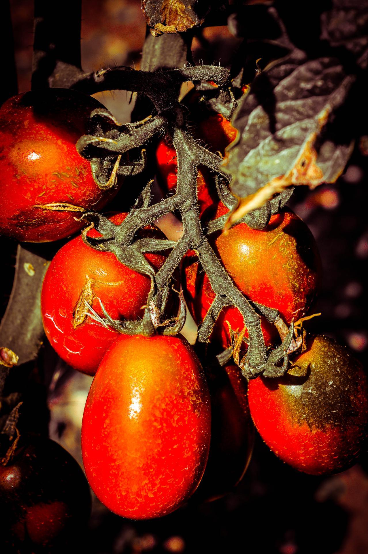 un air de tomate....