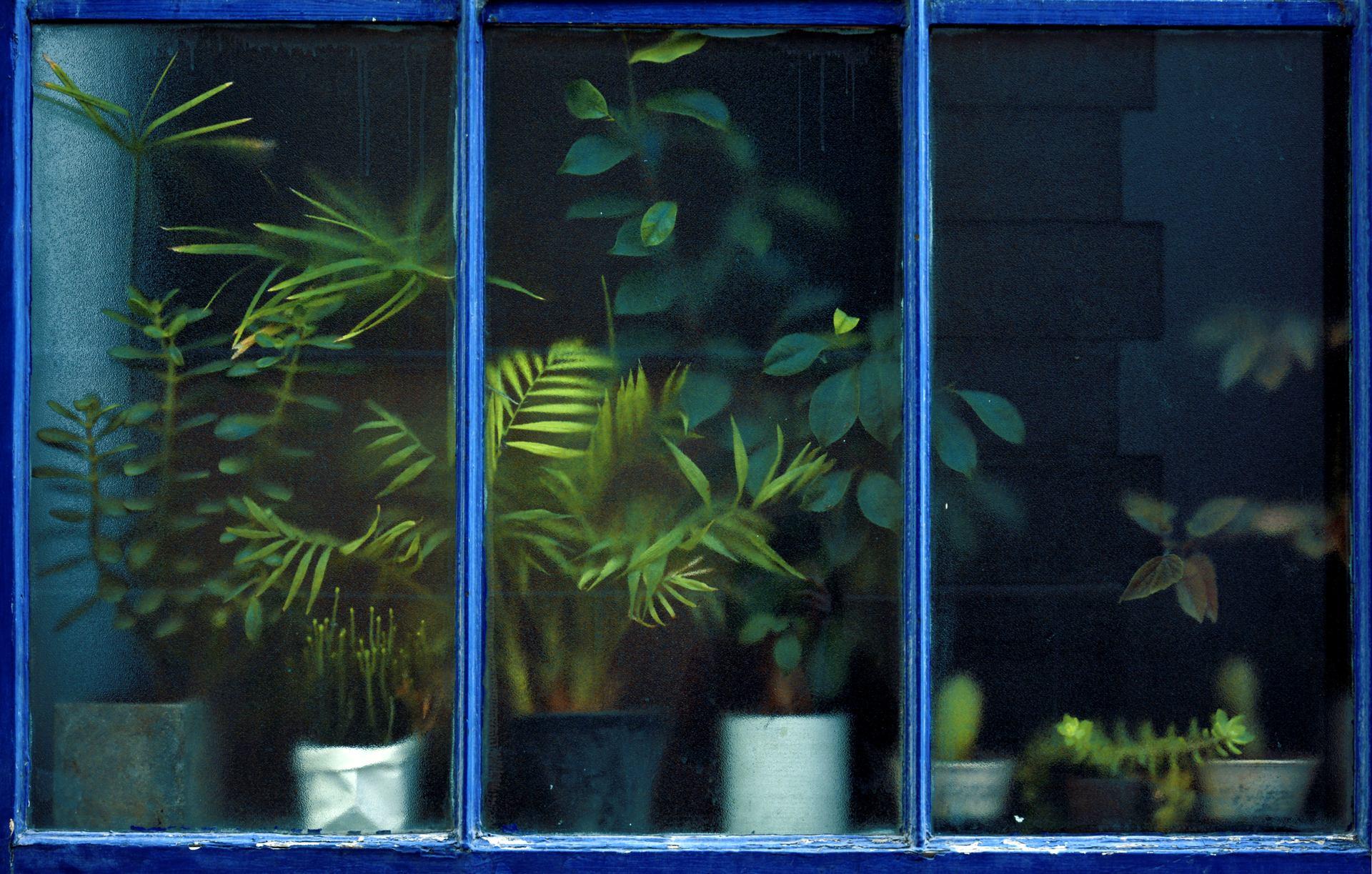 mini jungle urbaine