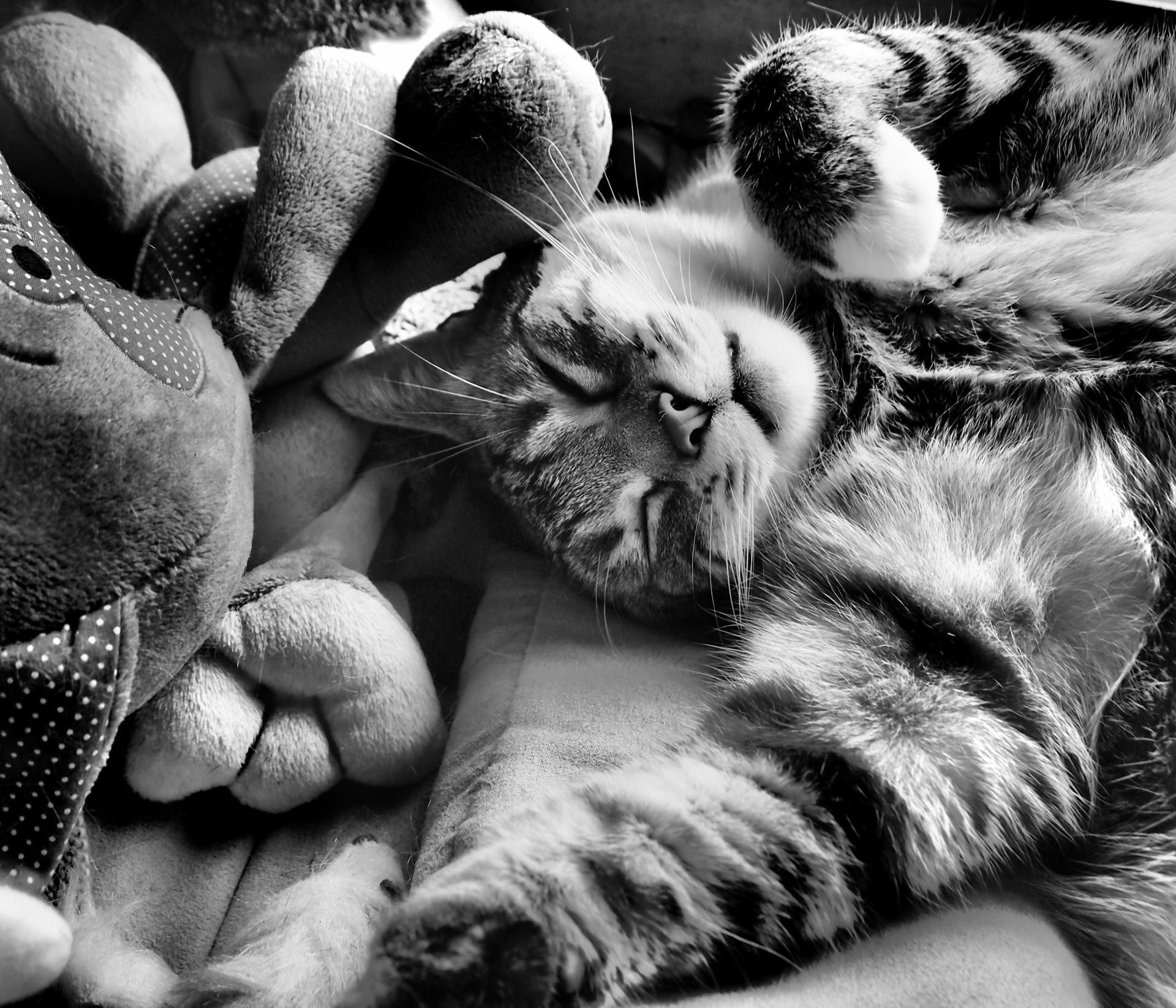 Gus rêve.
