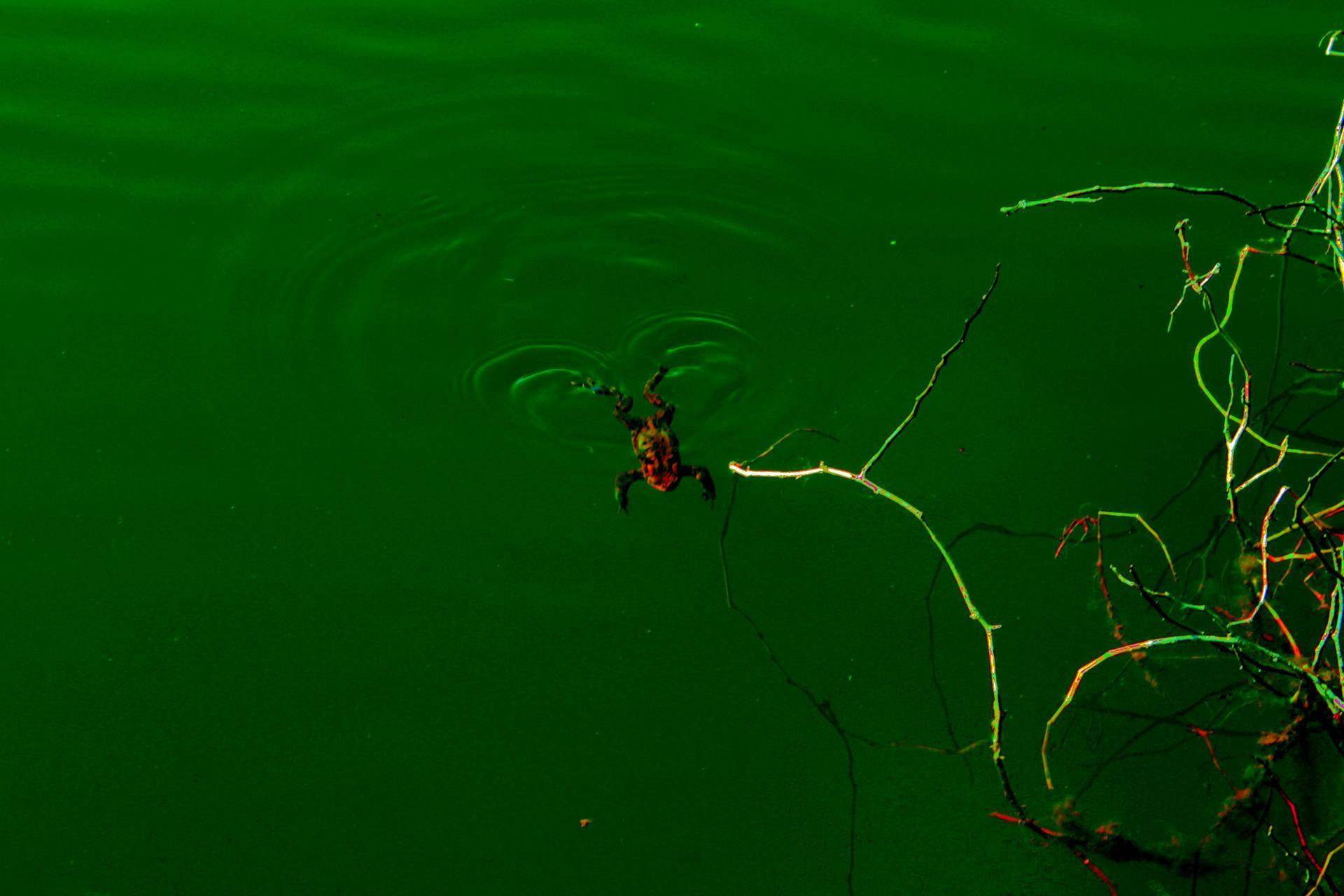la nage grenouile JPG