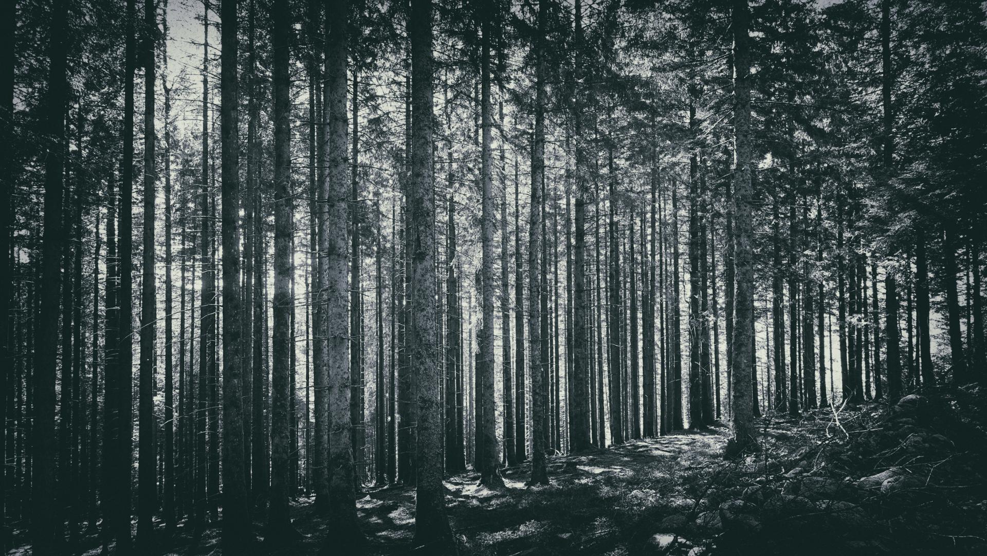 Les arbres me cachent la forêt...