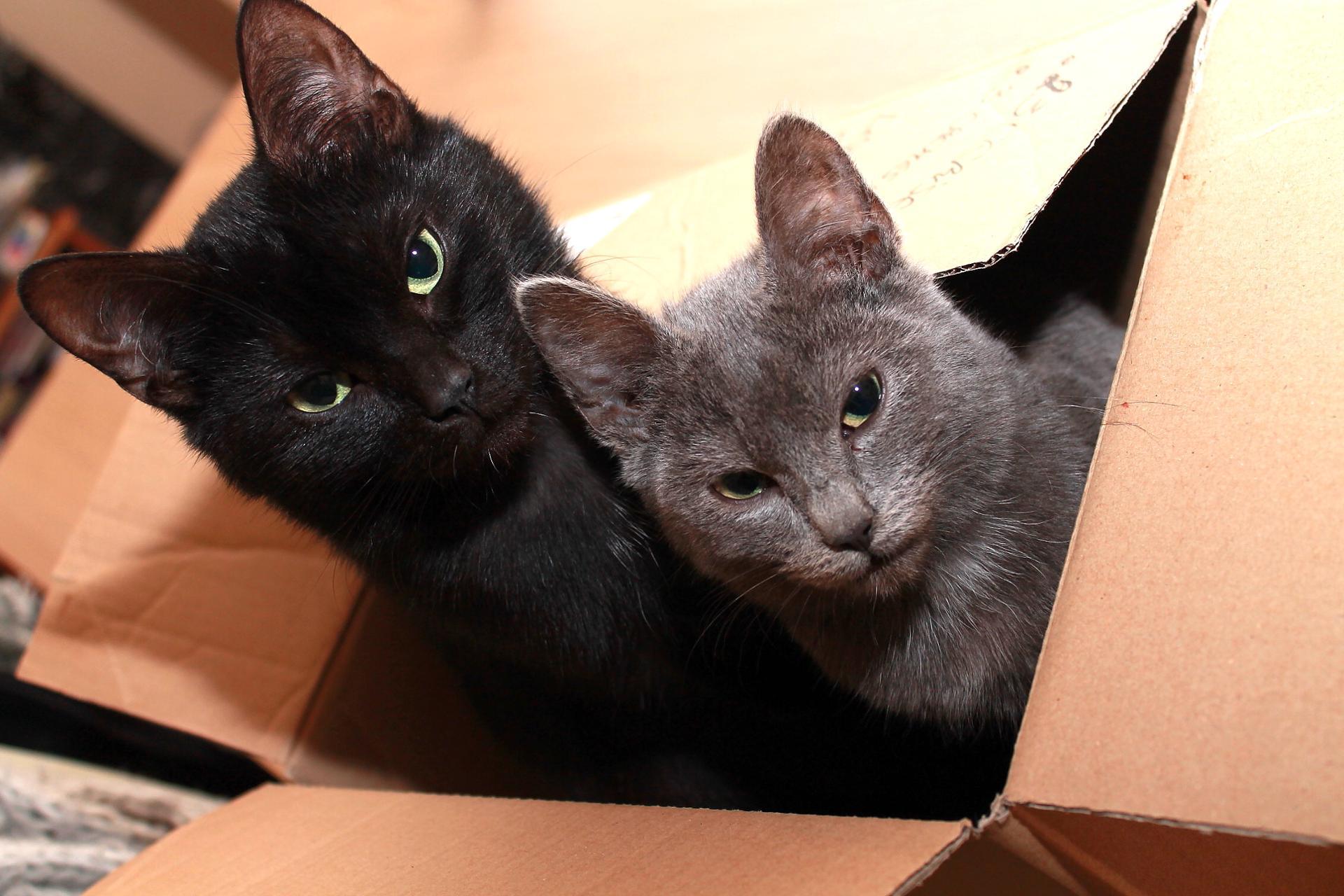 Dans la boîte !
