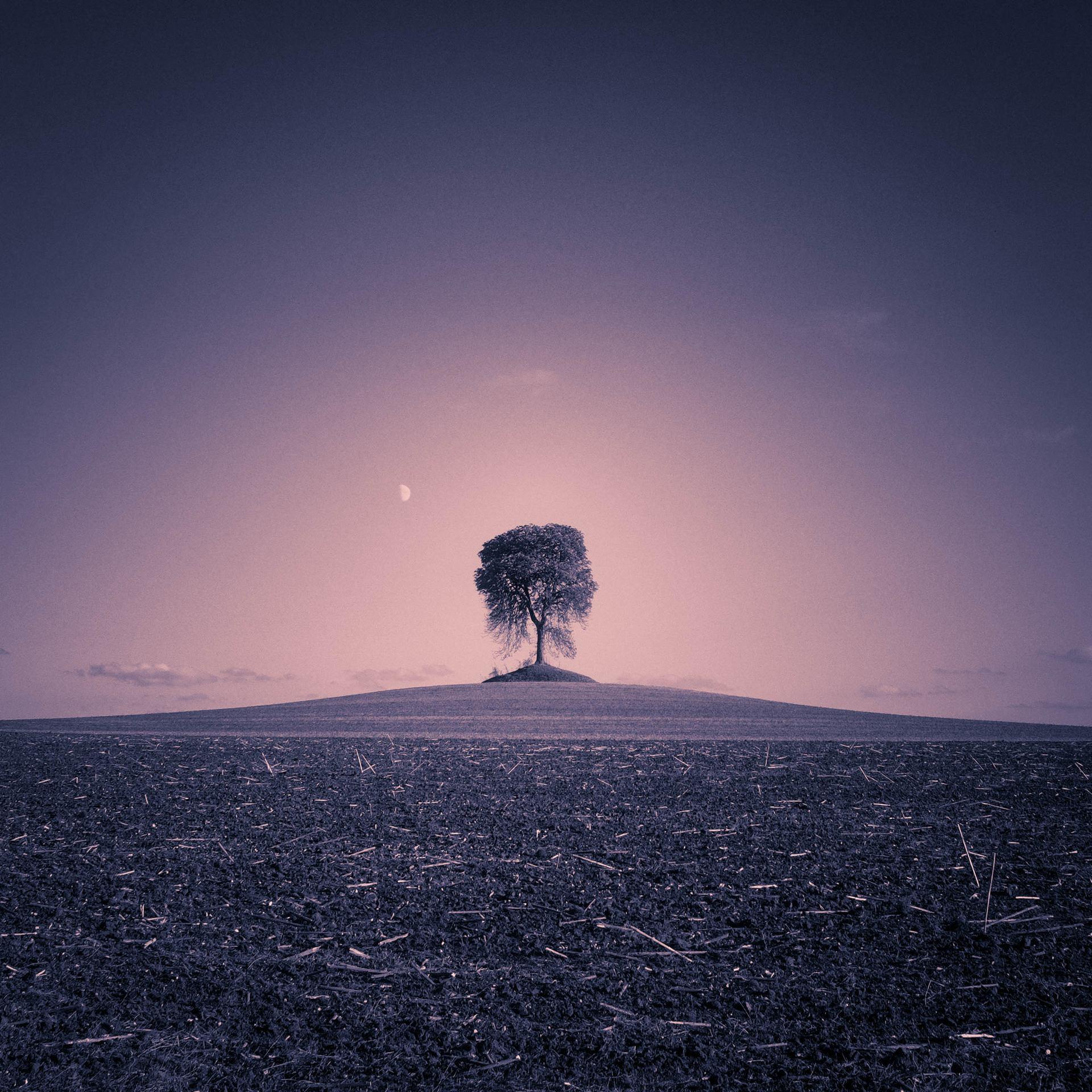 Grand arbre tout petit.