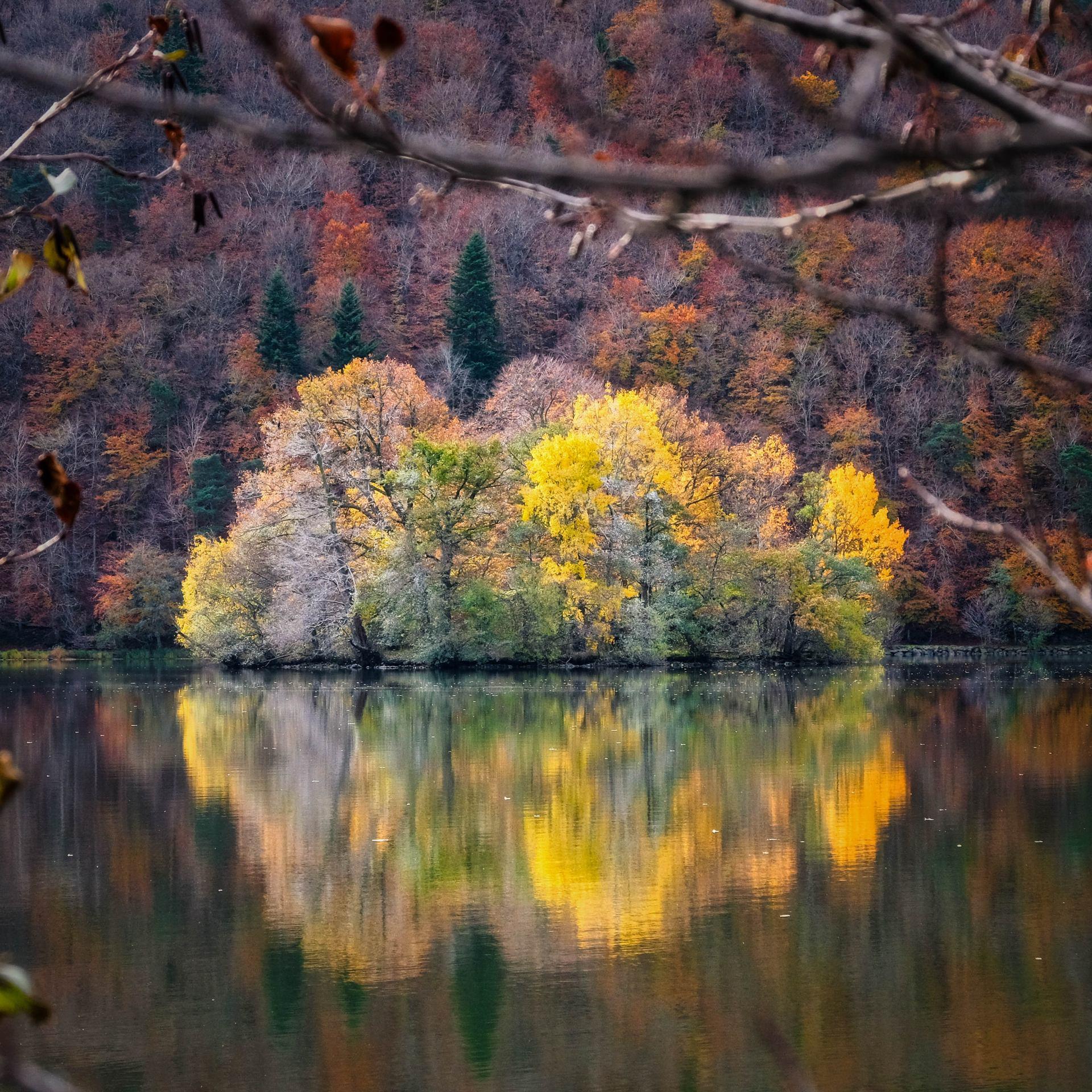 50 nuances d'automne.