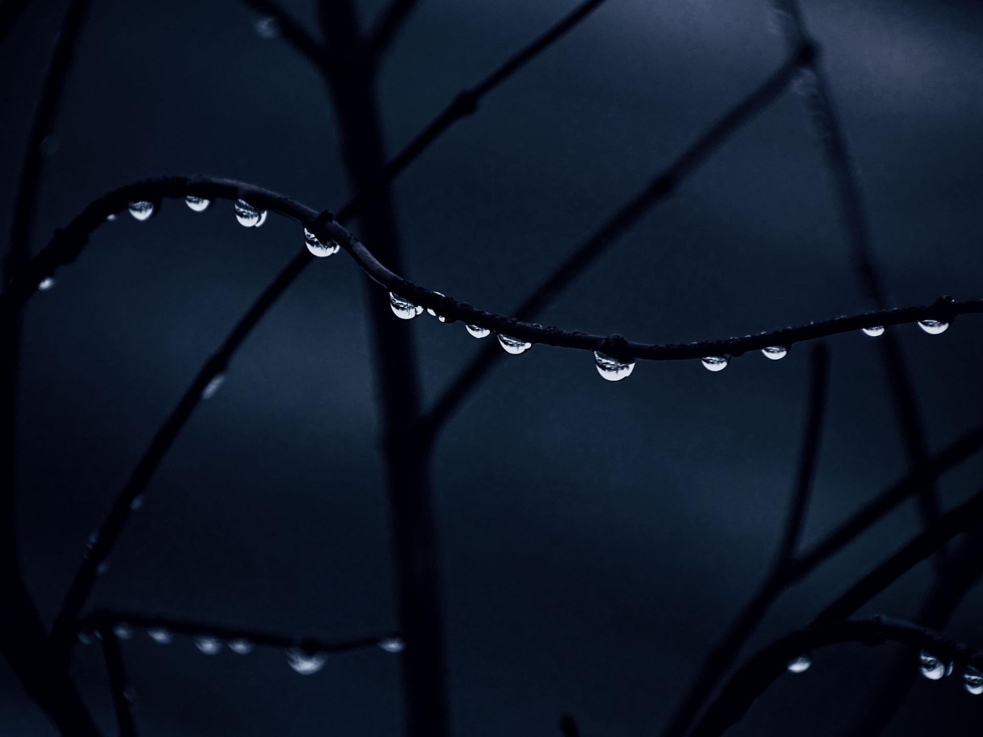 les perles de l'hiver
