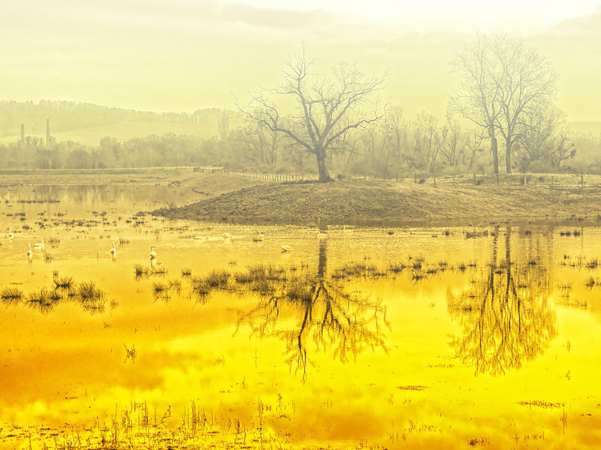...de l'eau qui d'or