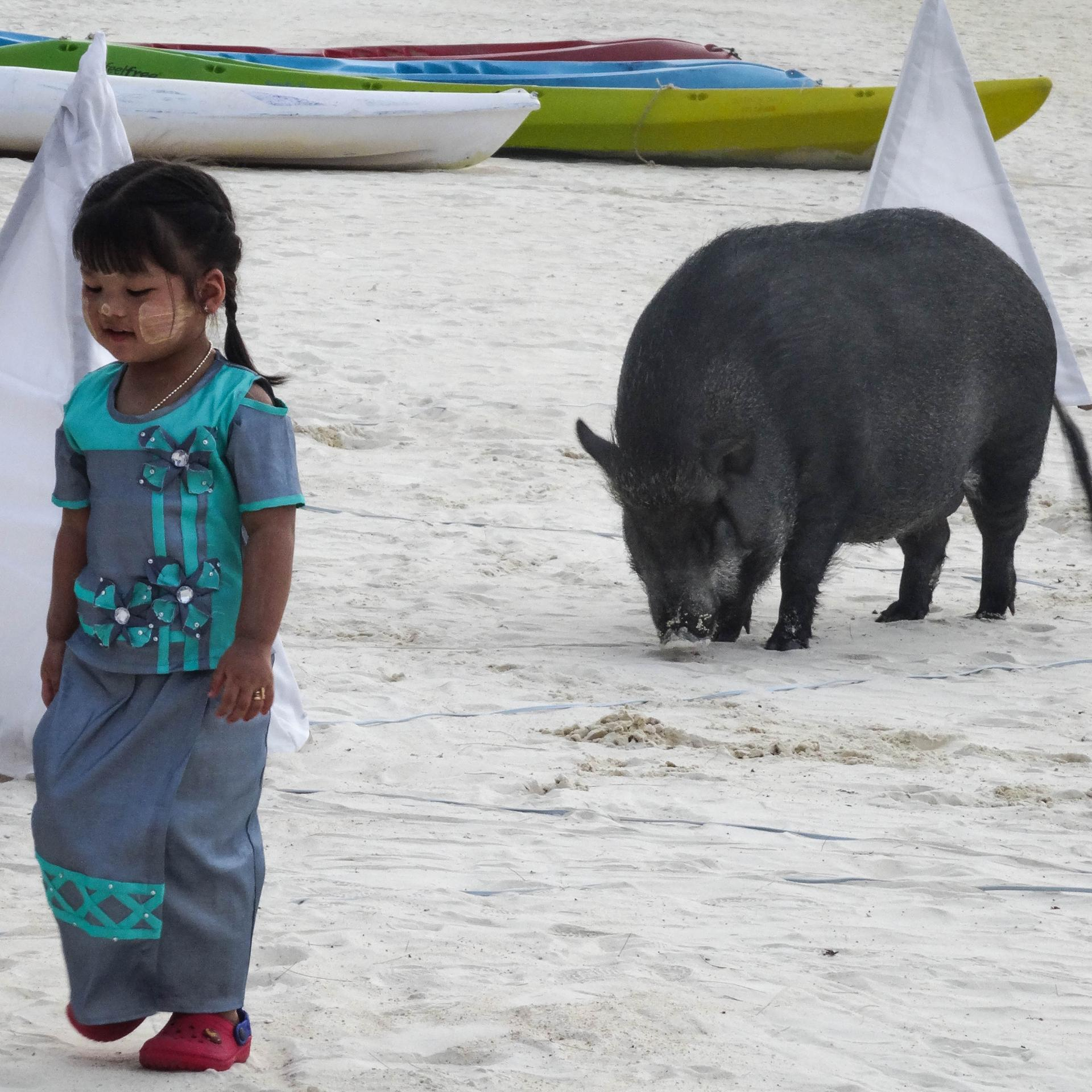The little girl and the pig