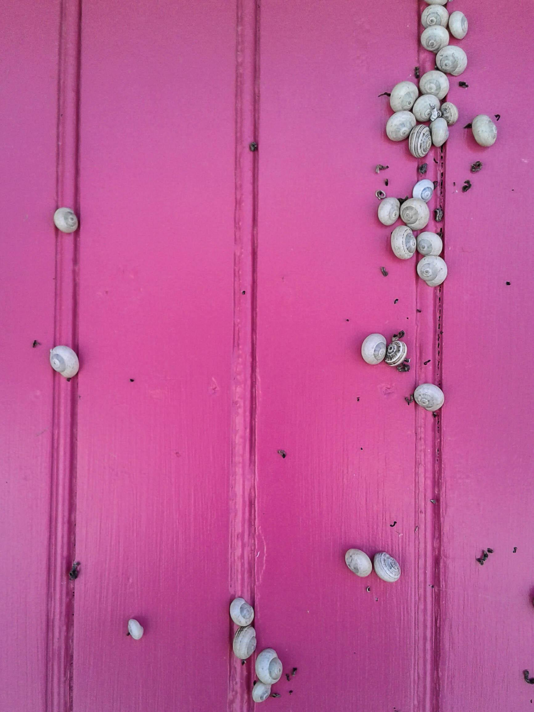 Les escargots aiment le rose