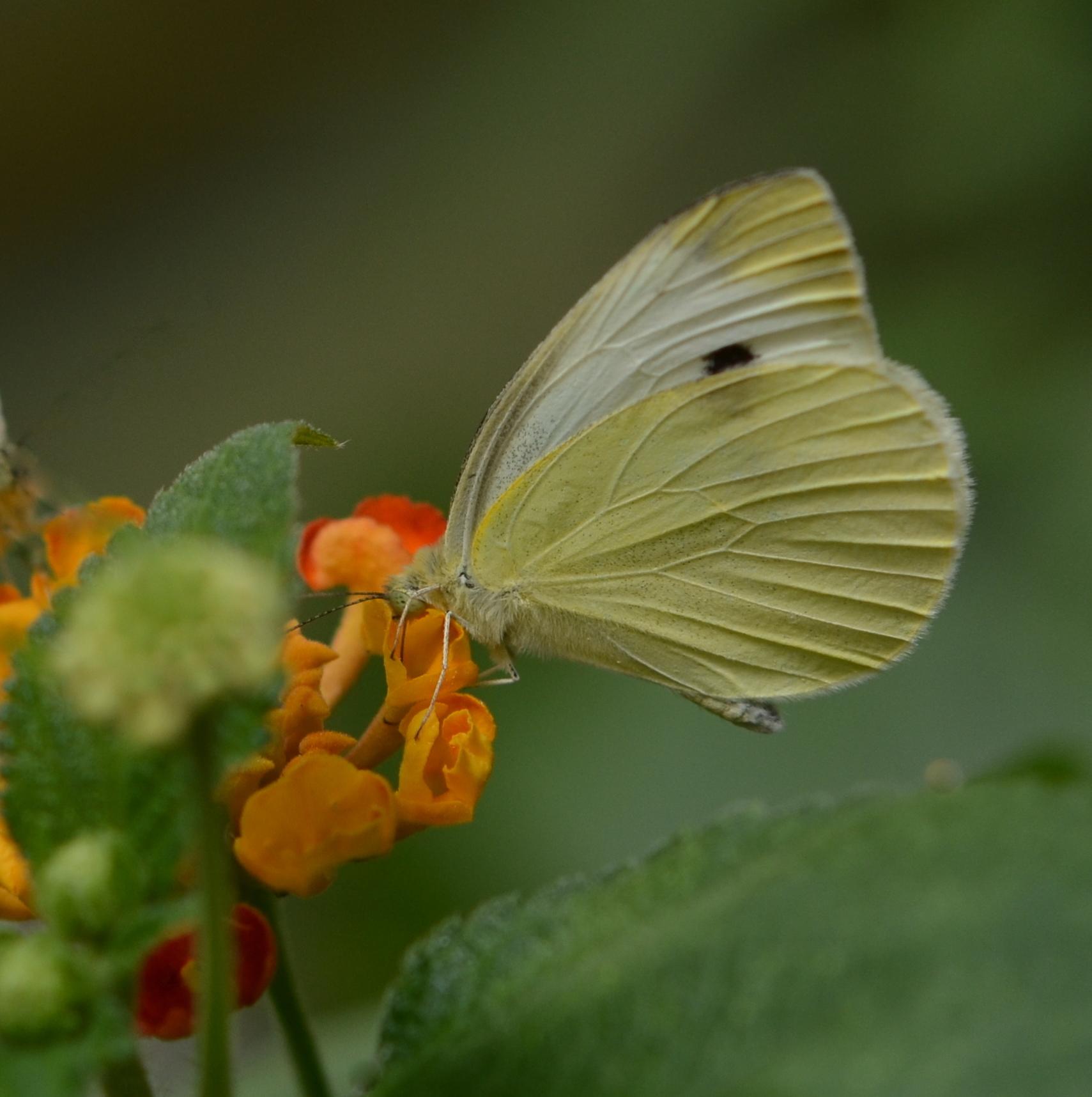 Délicieux ce nectar !