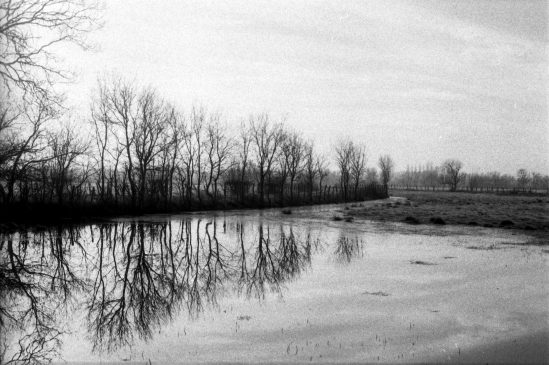 l'hiver dans les marais