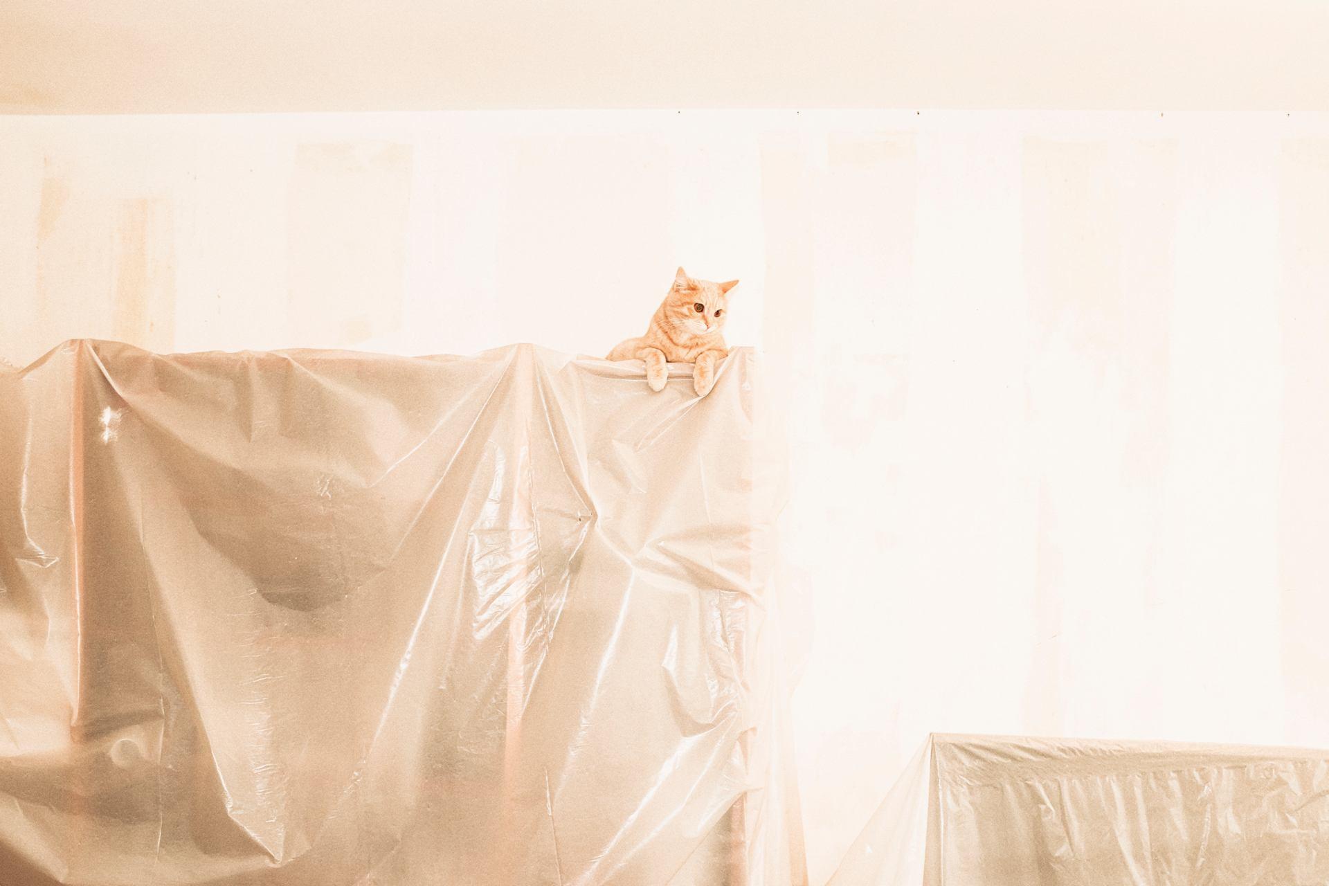 Le chat 2